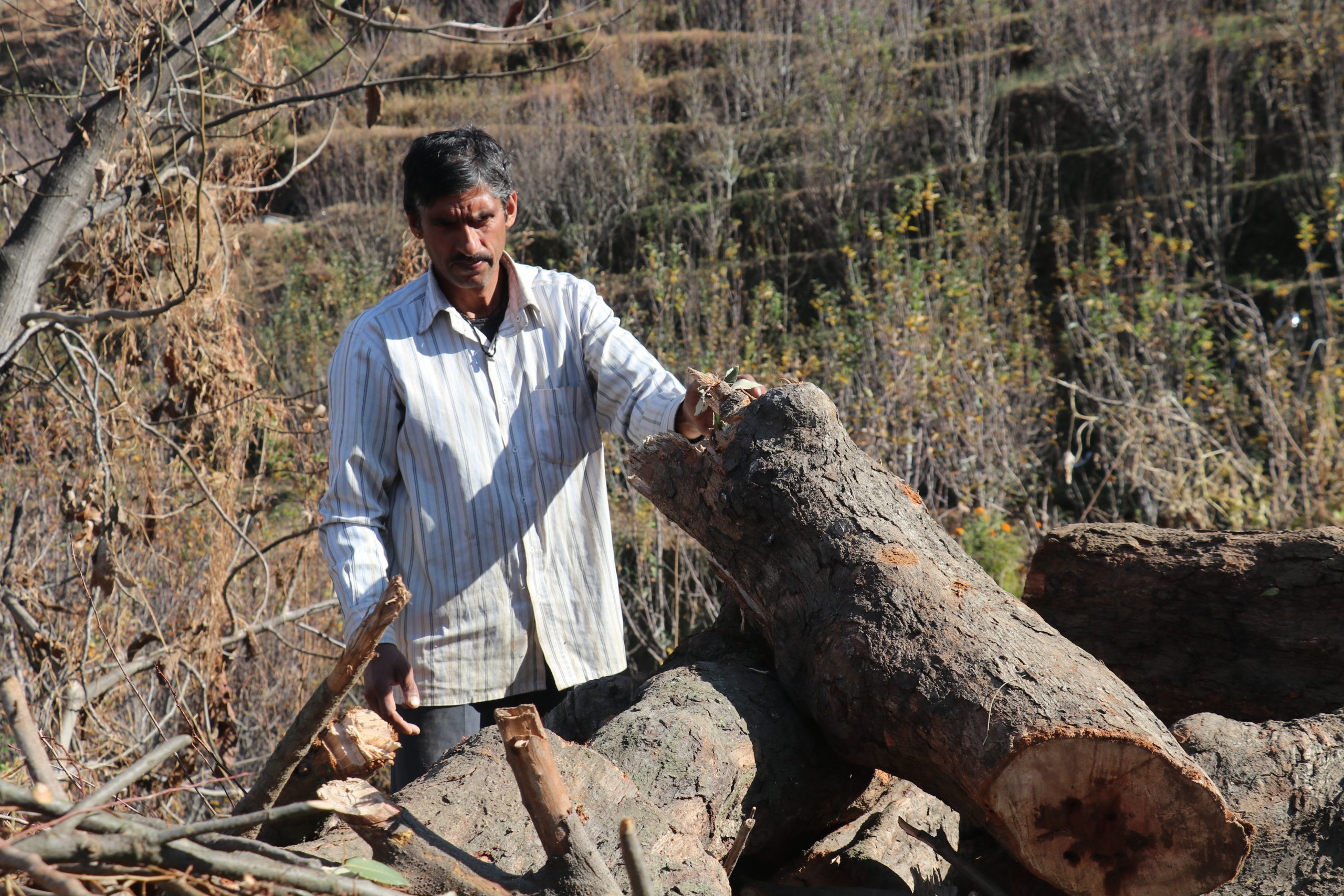 A man near wood logs