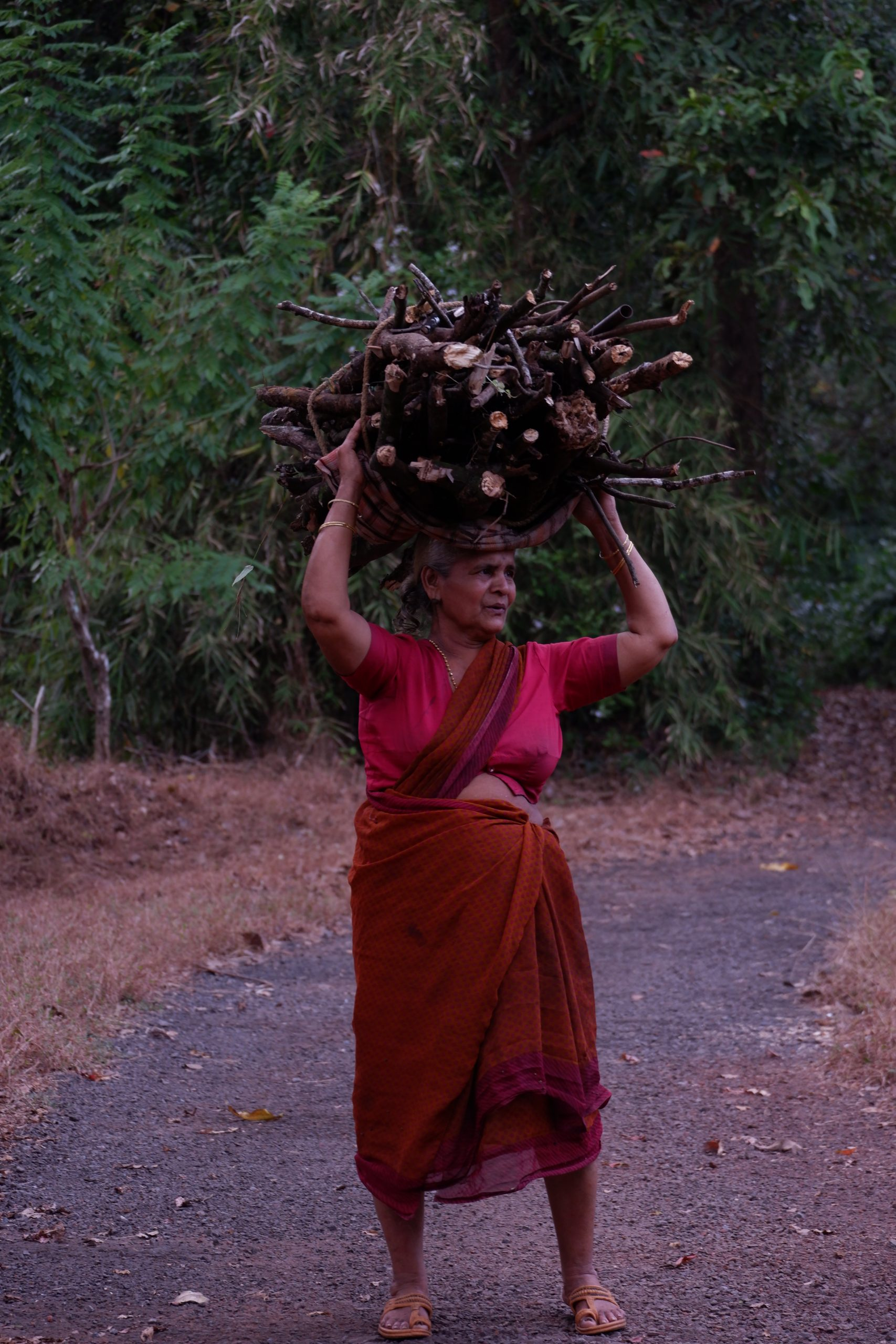 A village woman carrying dry woods