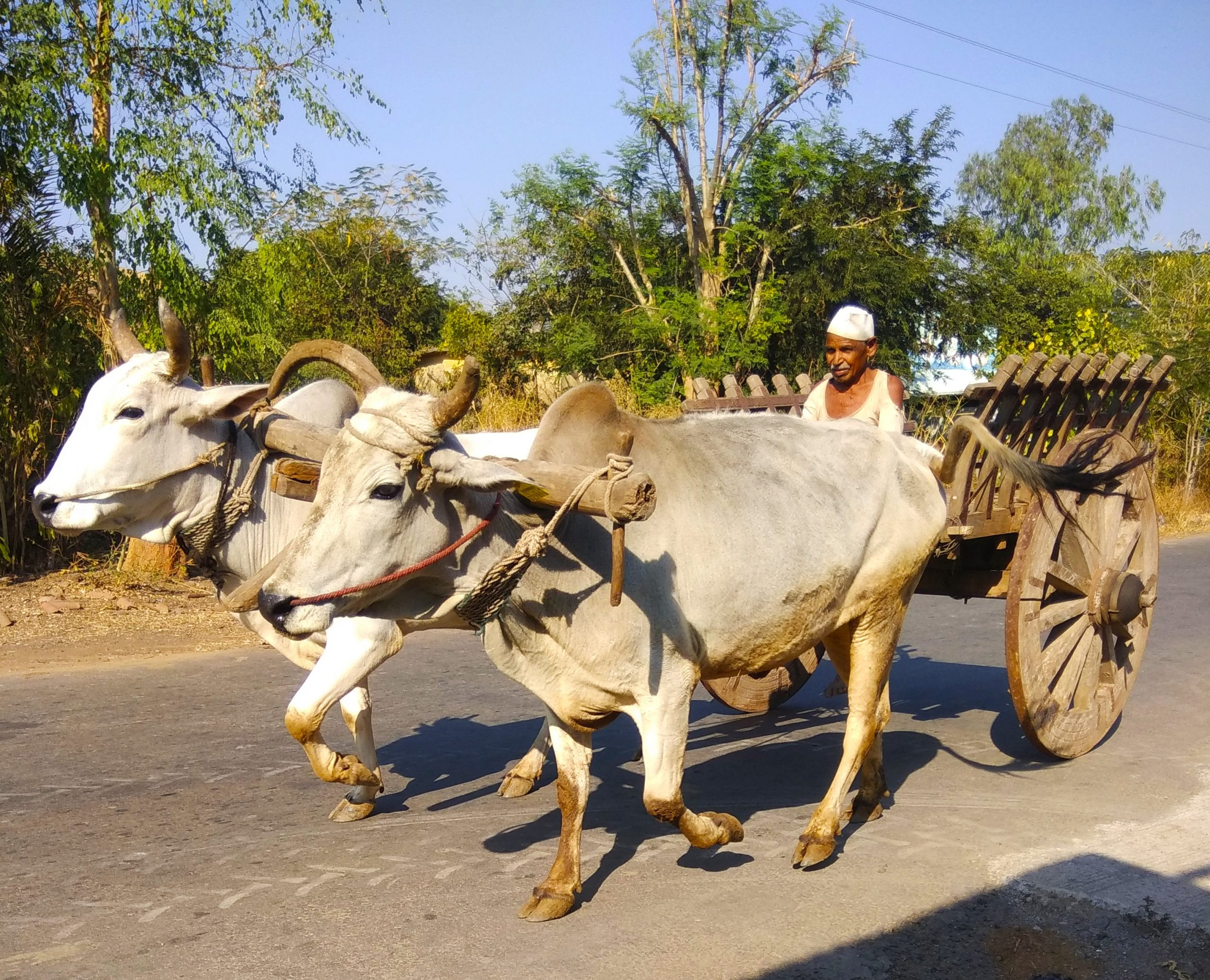 A farmer with oxcart