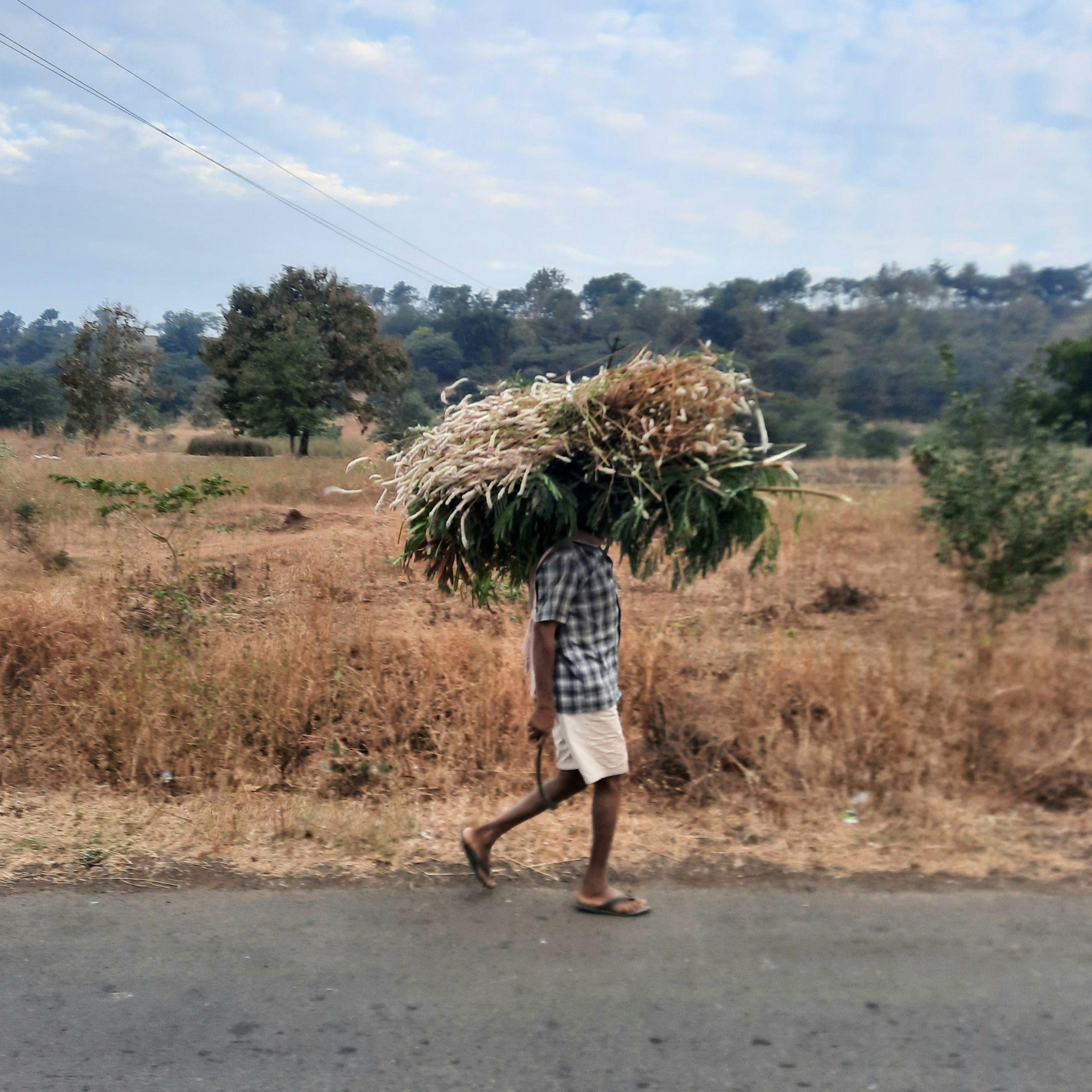 A farmer carrying grass bundle