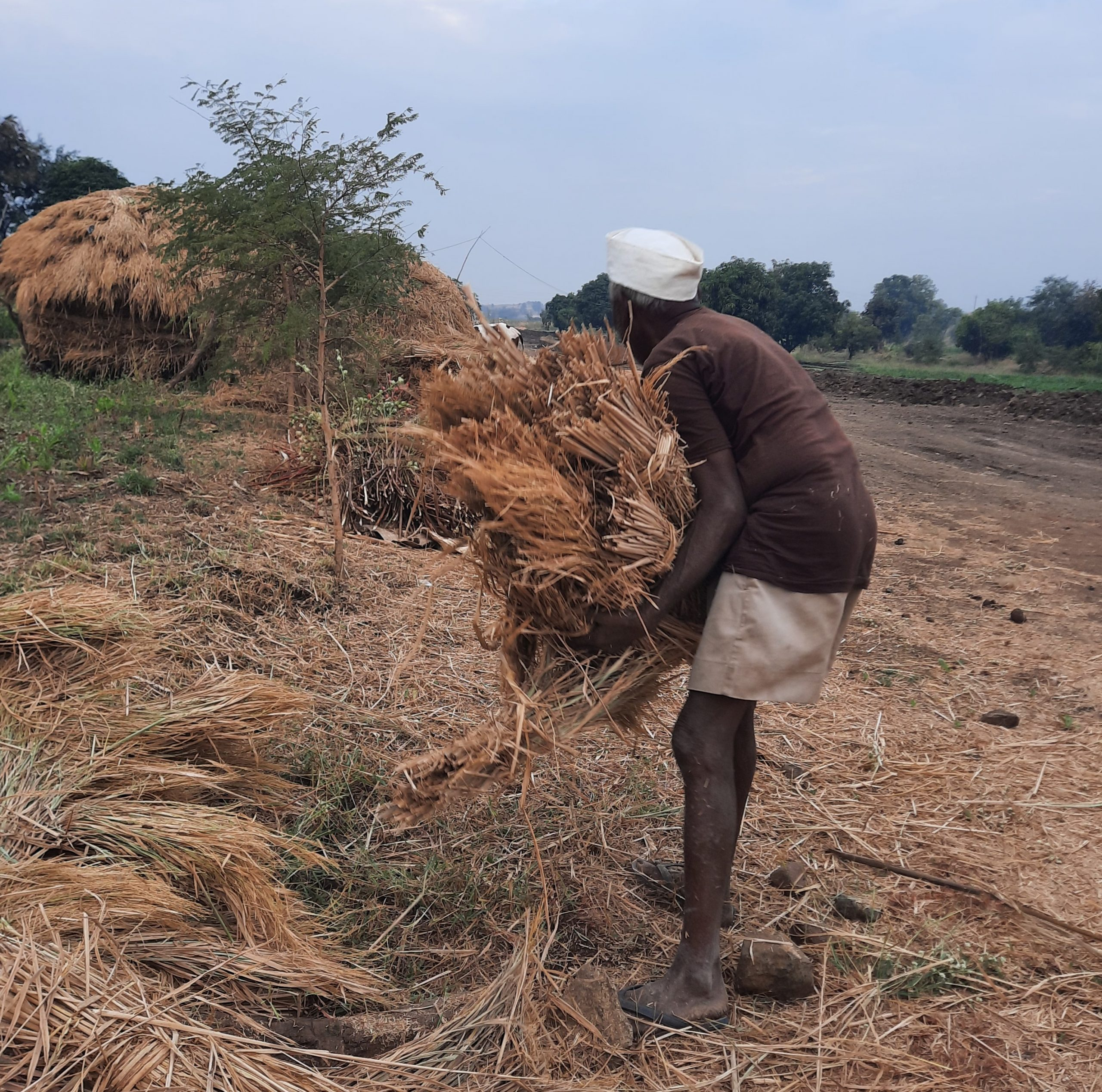 Farmer harvesting grass