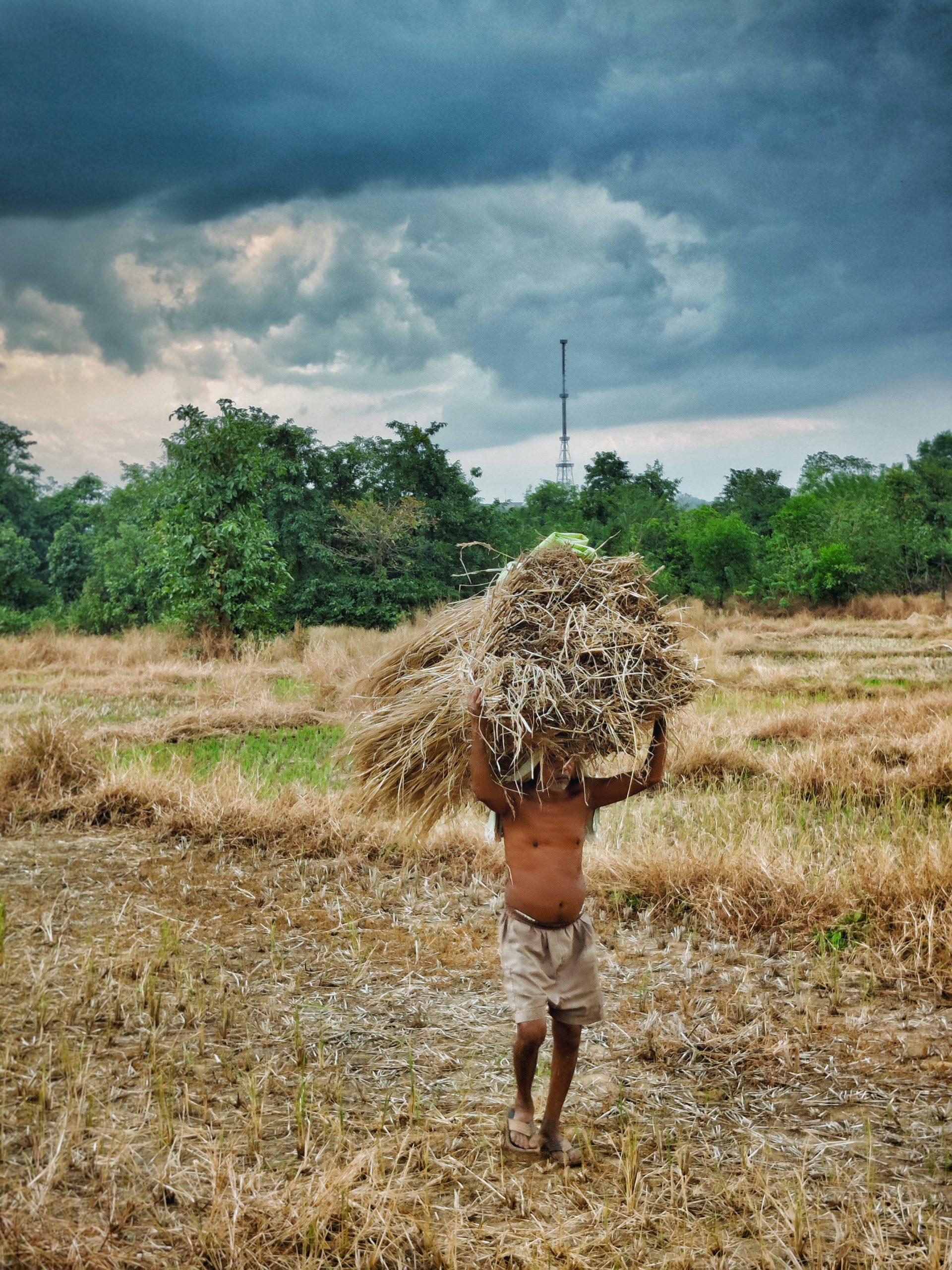 farmer carrying hay