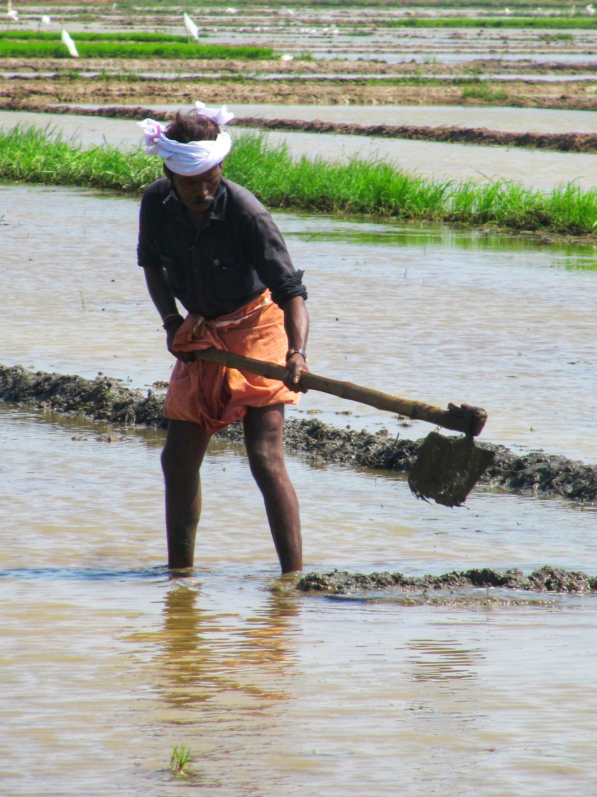 Farmers Working in Field