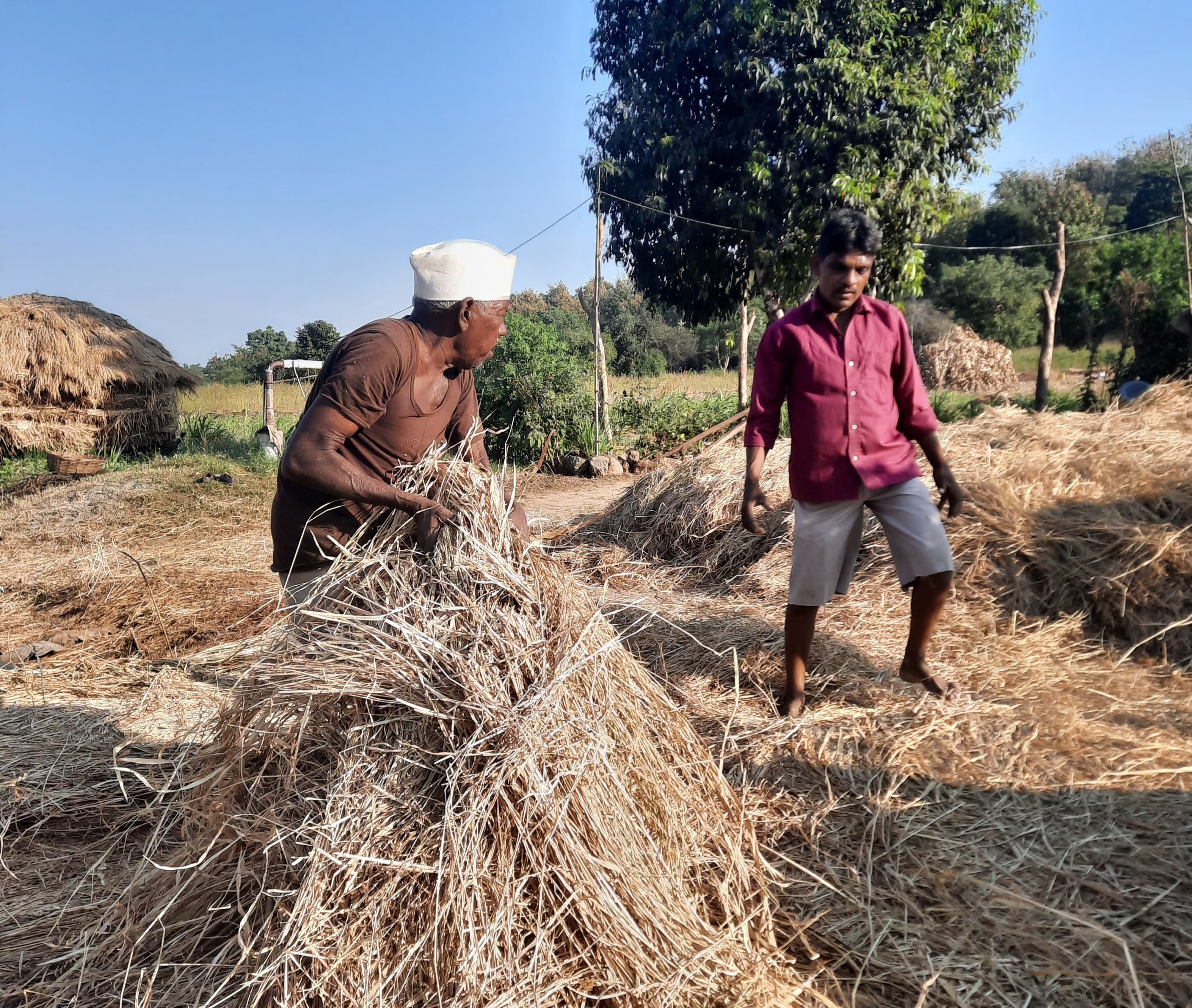Farmers and dry grass