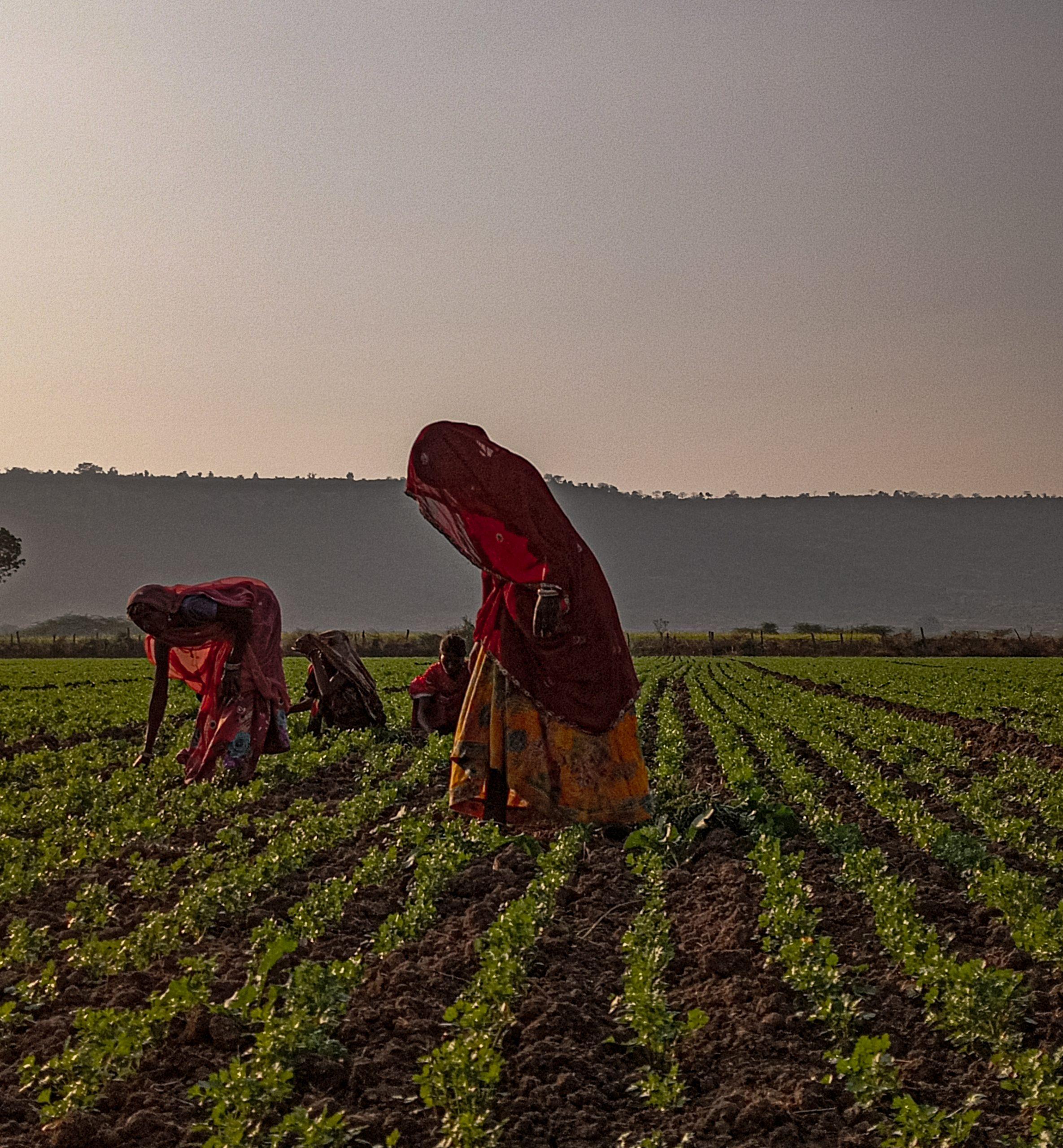 Farmers working in fields