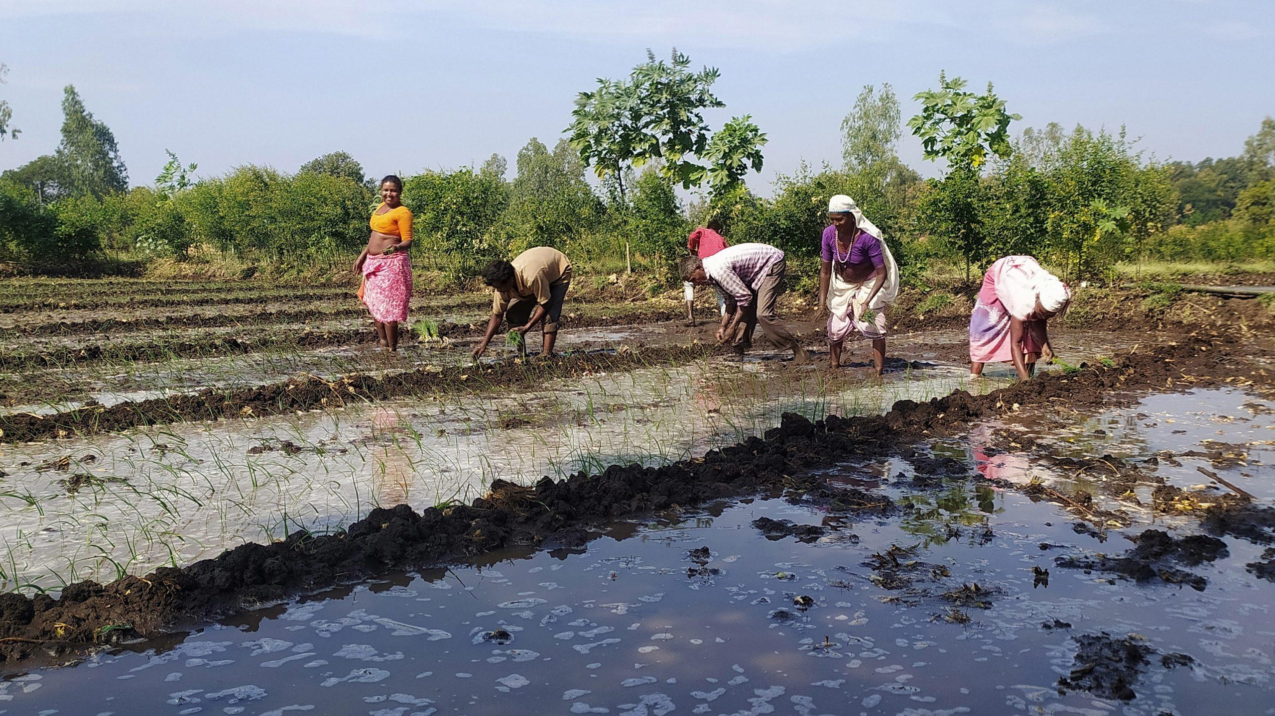 Farmers working in muddy field