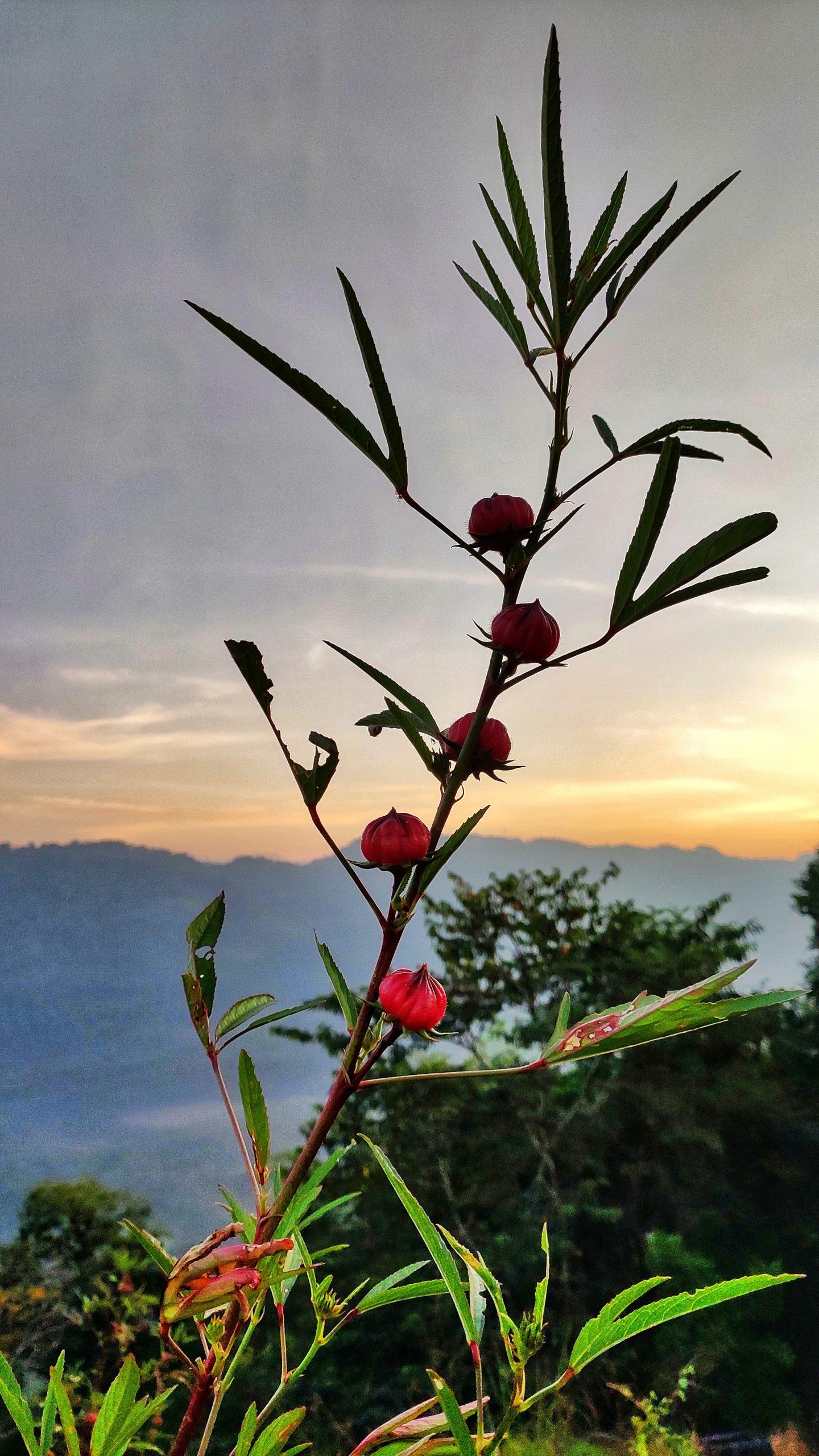 Flower buds with beautiful sky