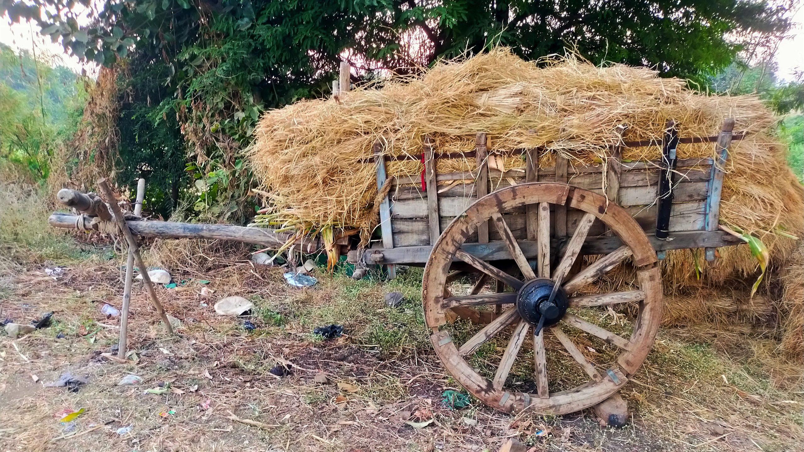 Fodder on a cart