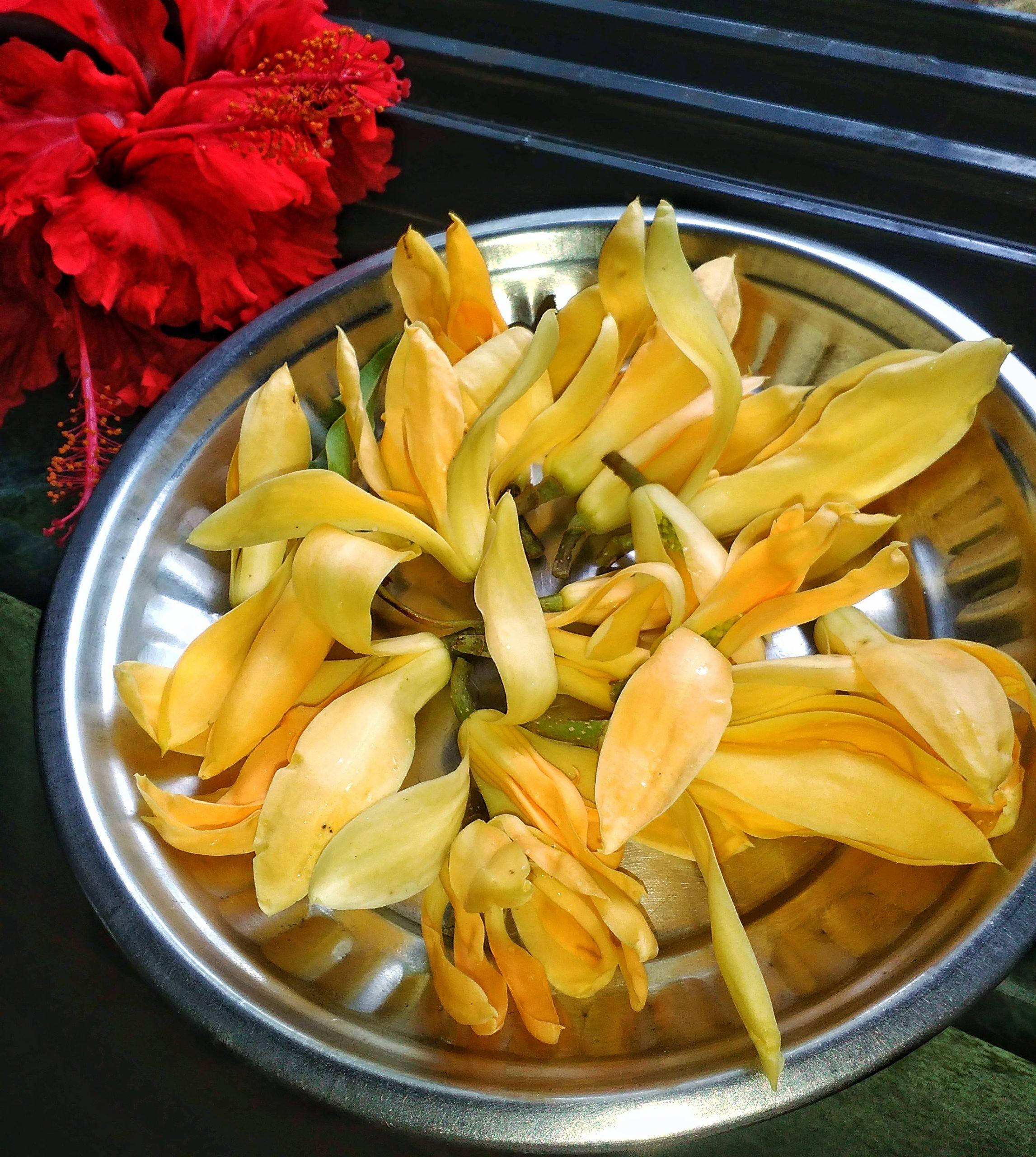Frangipani plant flower