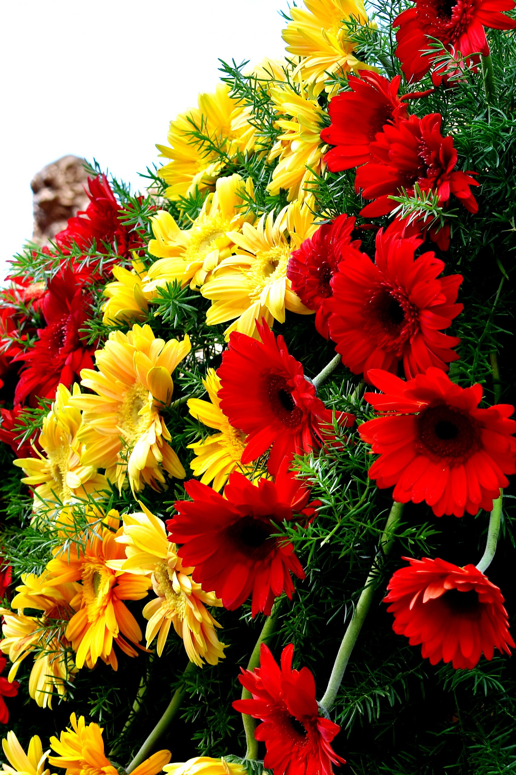 Fresh and colorful flowers