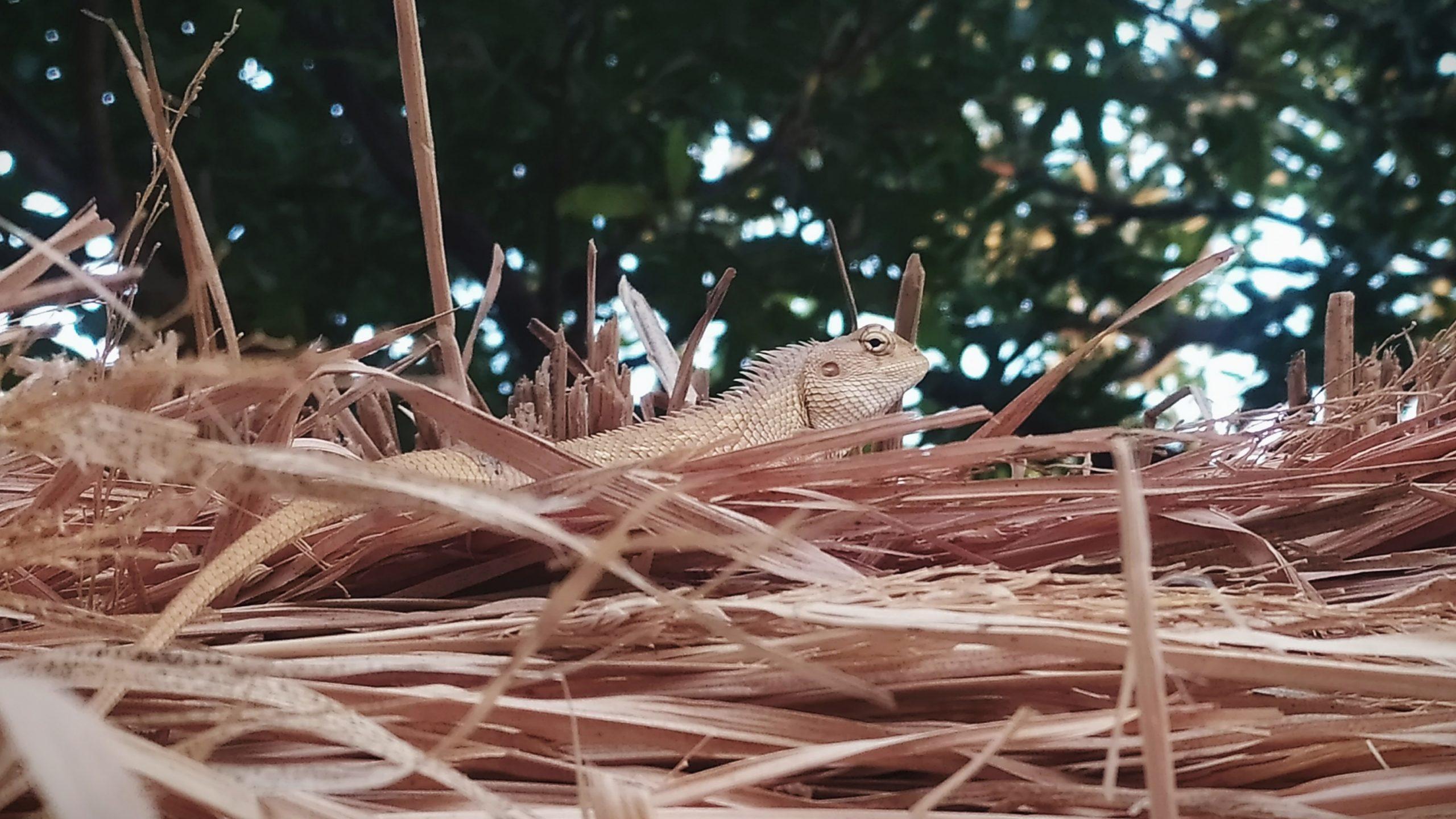 Lizard on grass