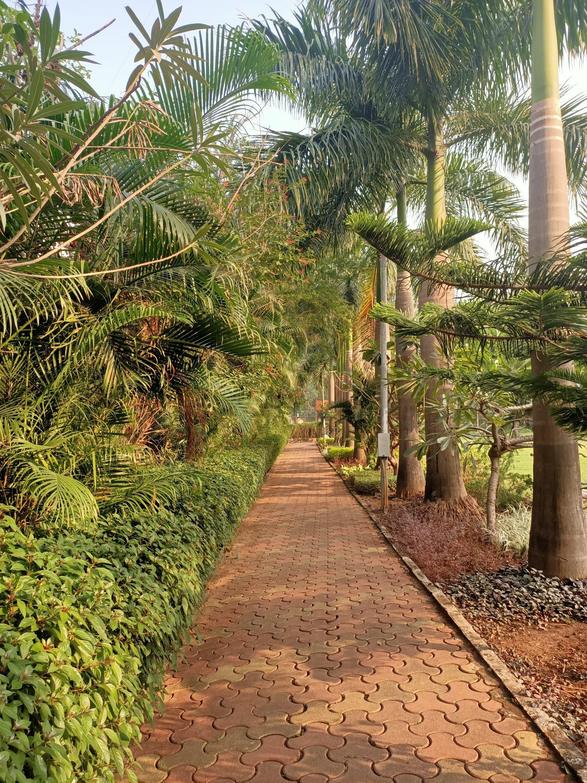 walking track in garden