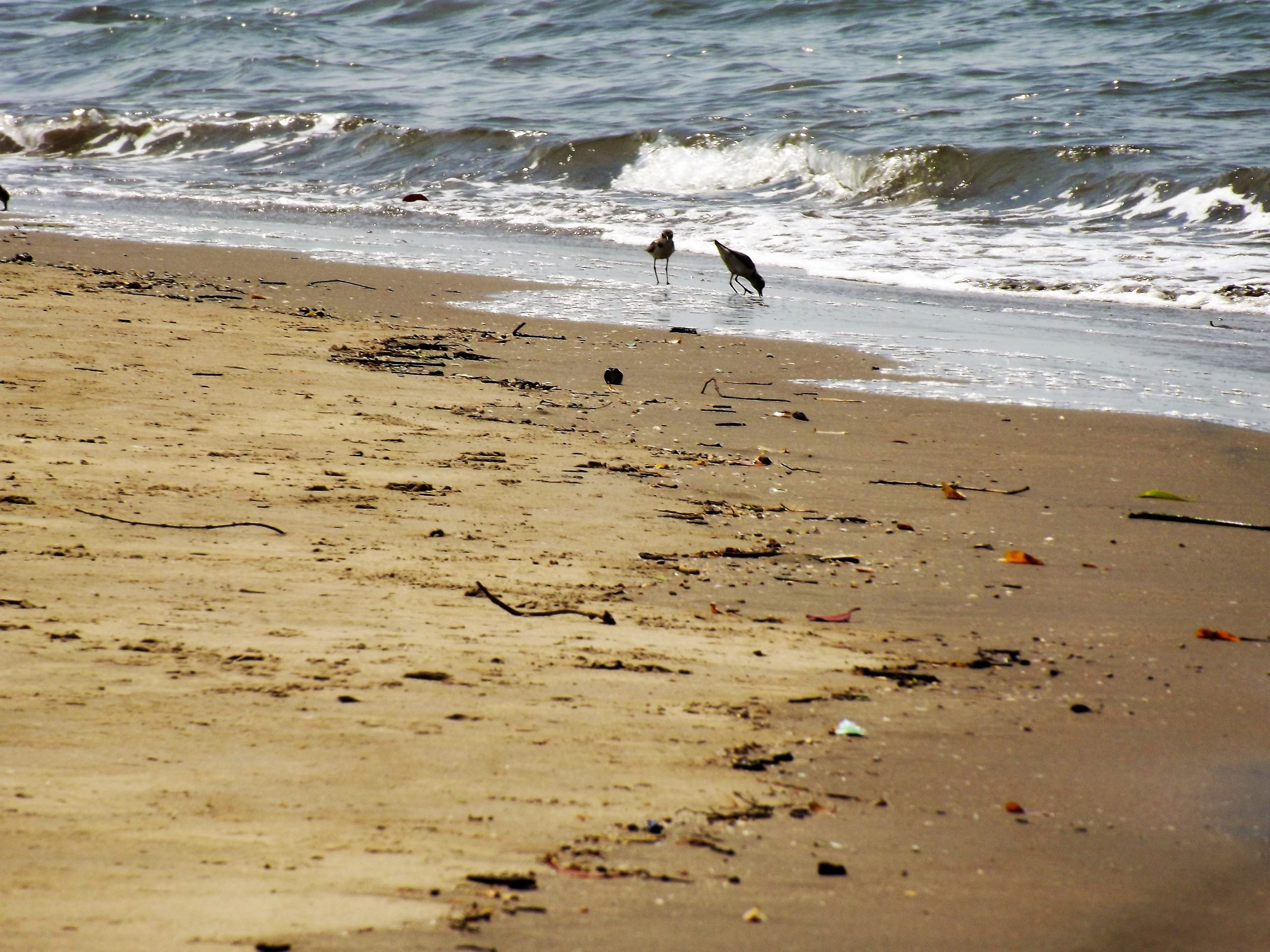 Birds on Beach bank
