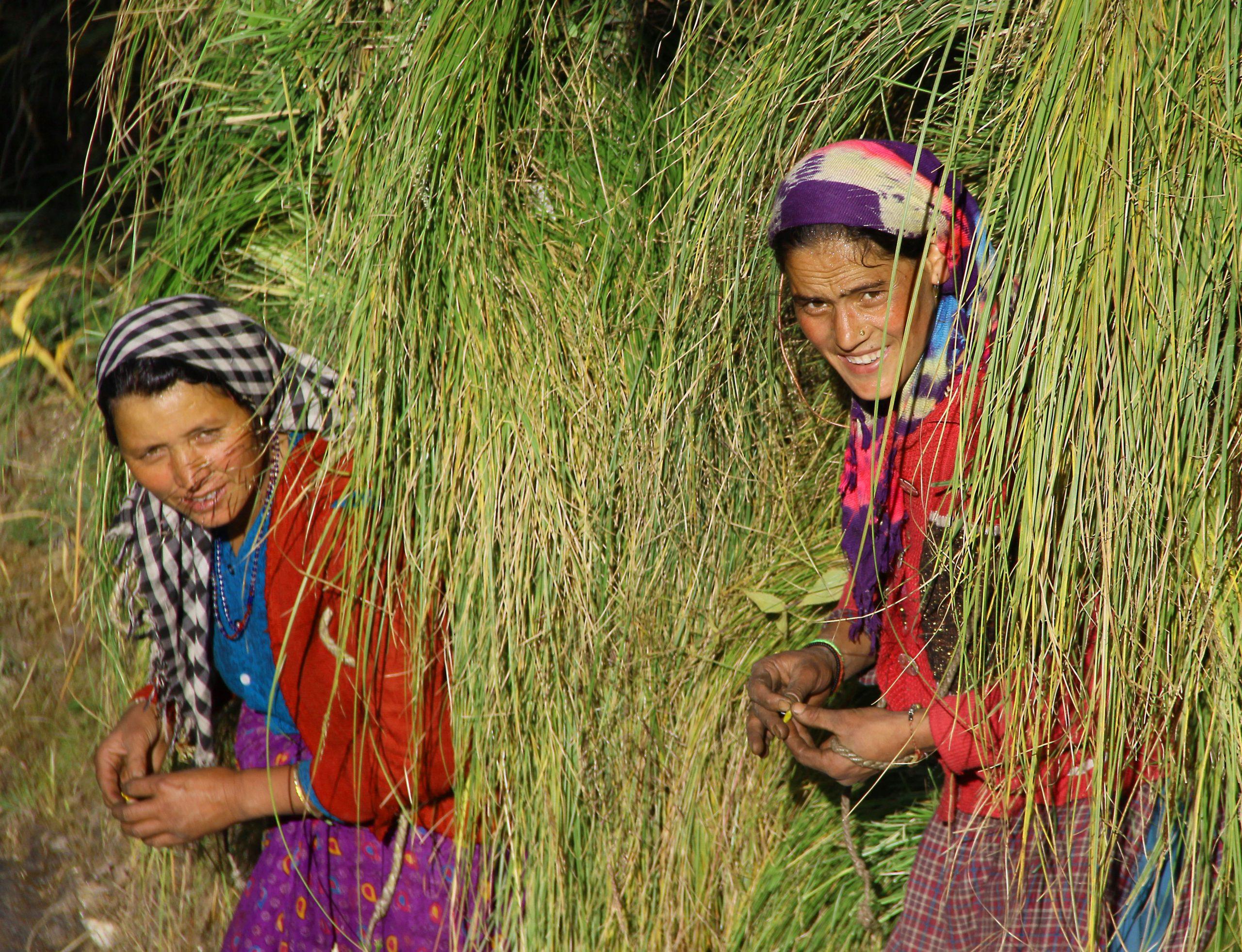 Indian female farmers