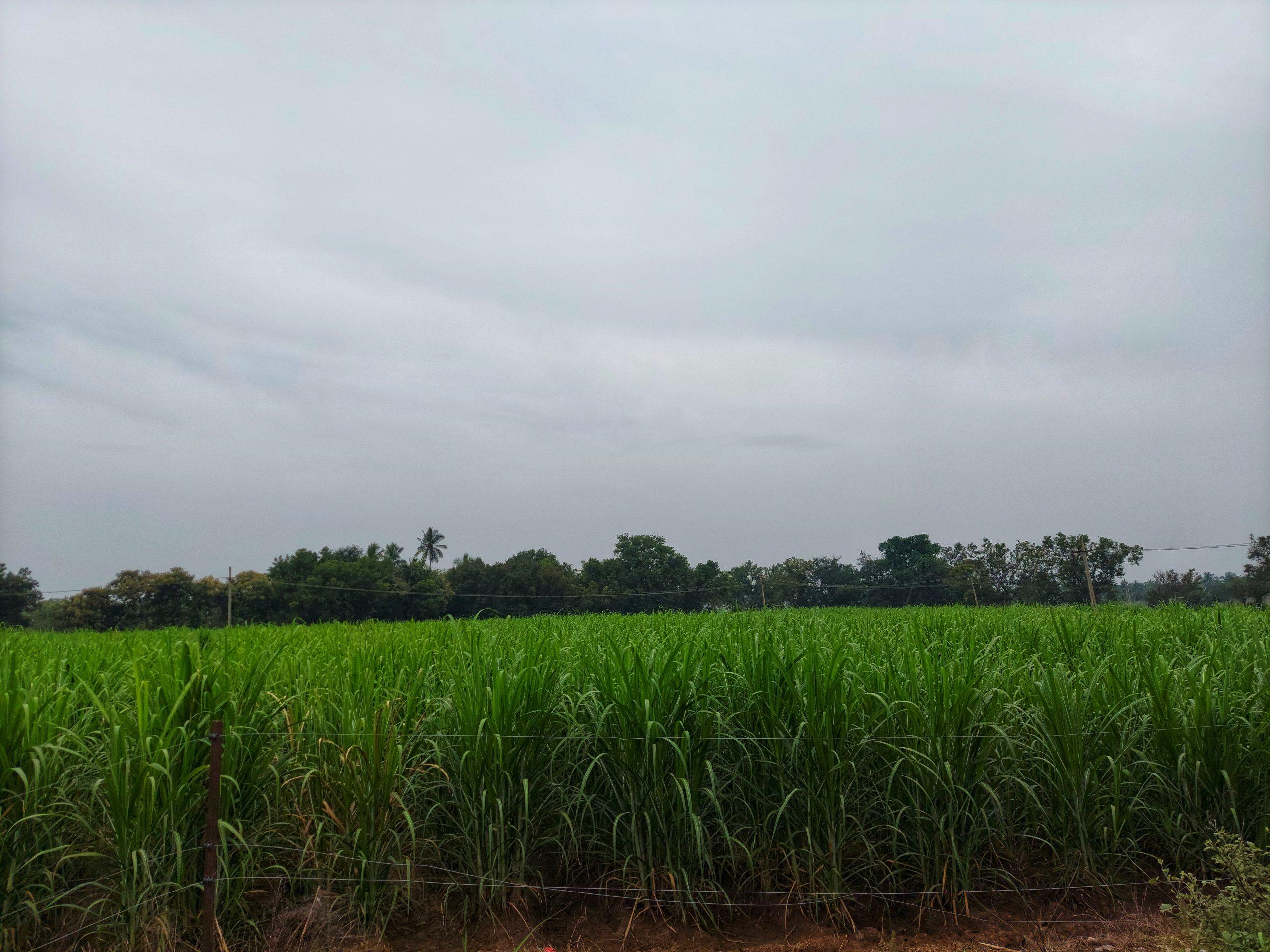 Green crop farm