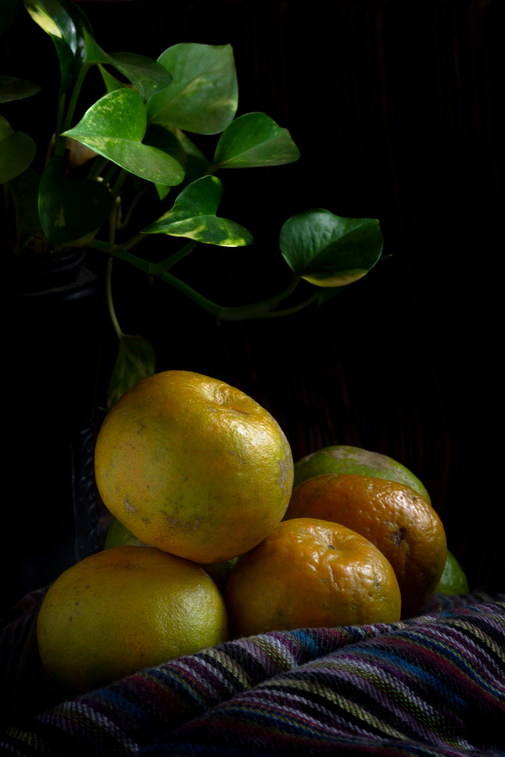 oranges for health