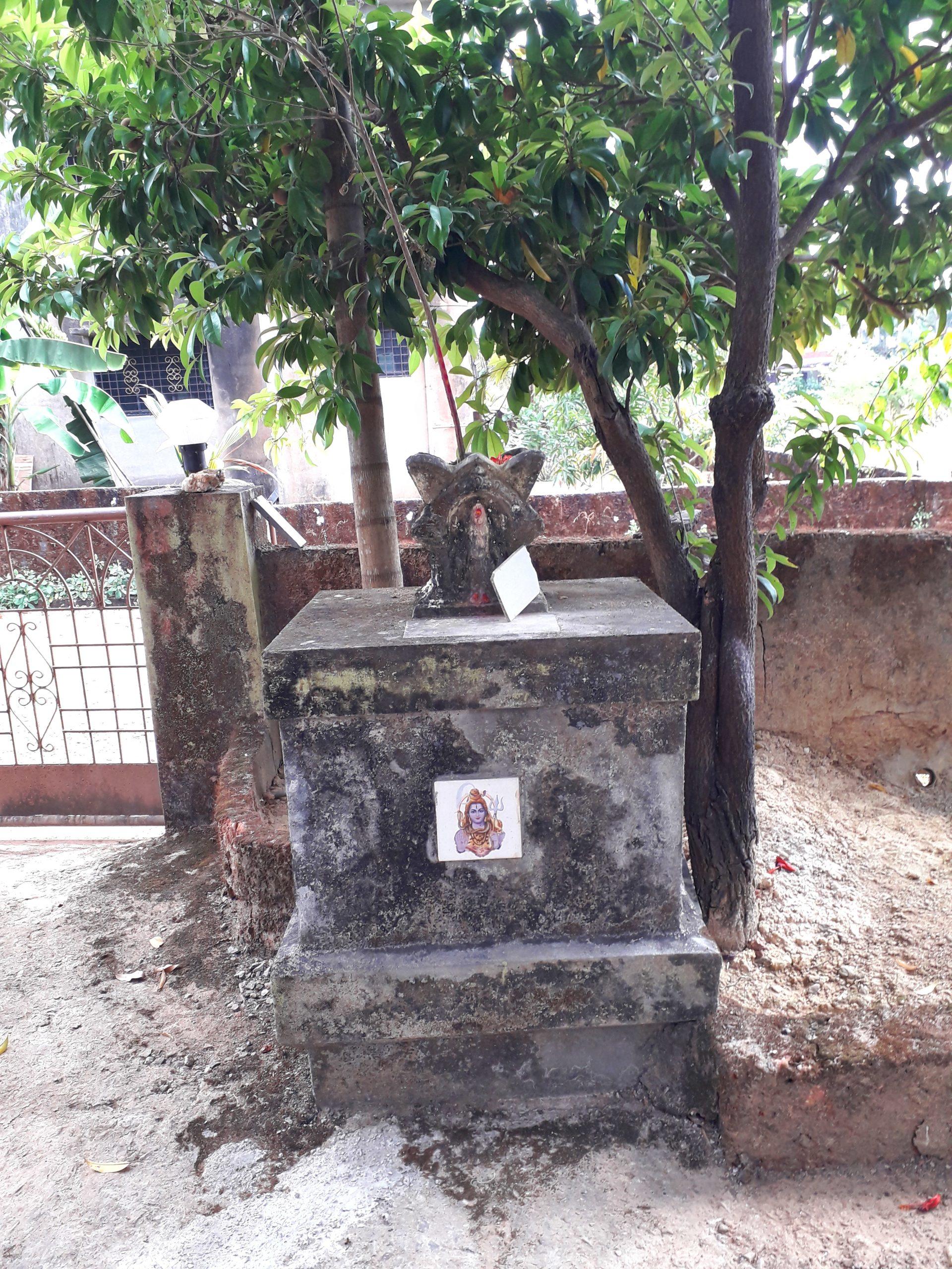 Holy basil pot in courtyard