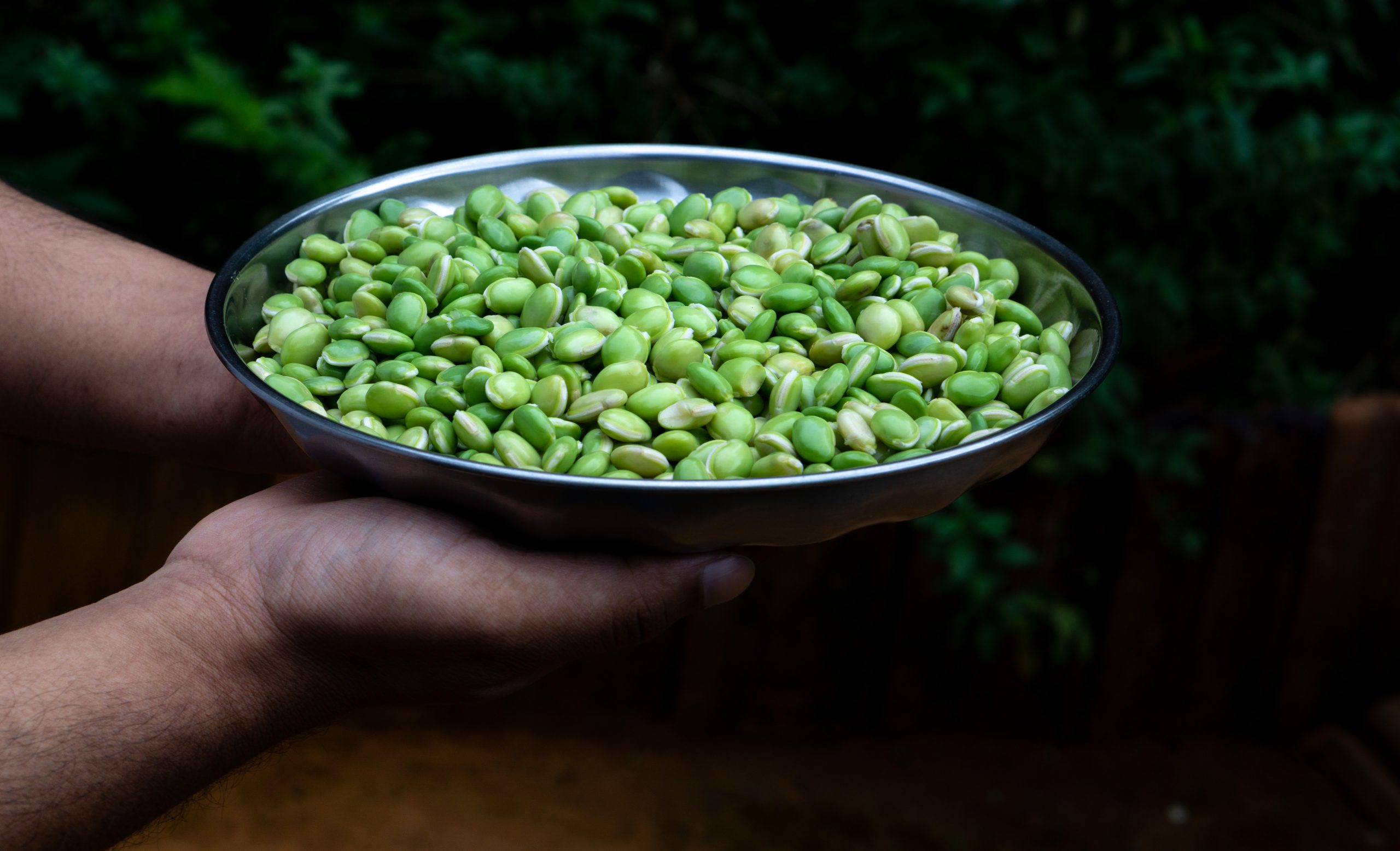 Human hands holding a plate of lima beans