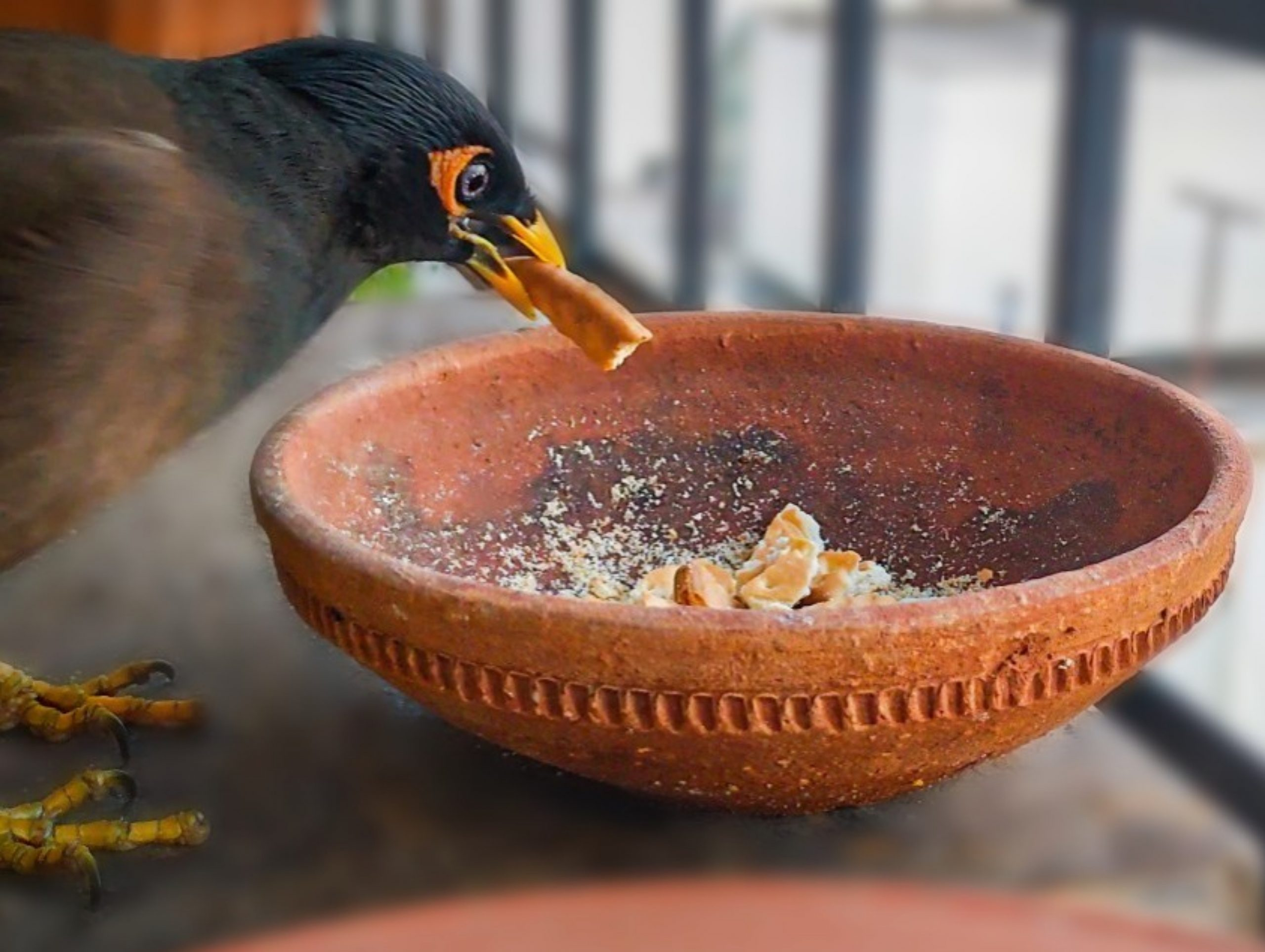 Bird eating from the bowl