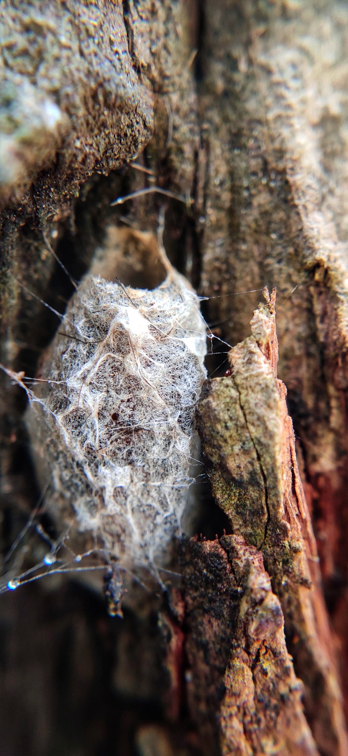 Nest of an insect