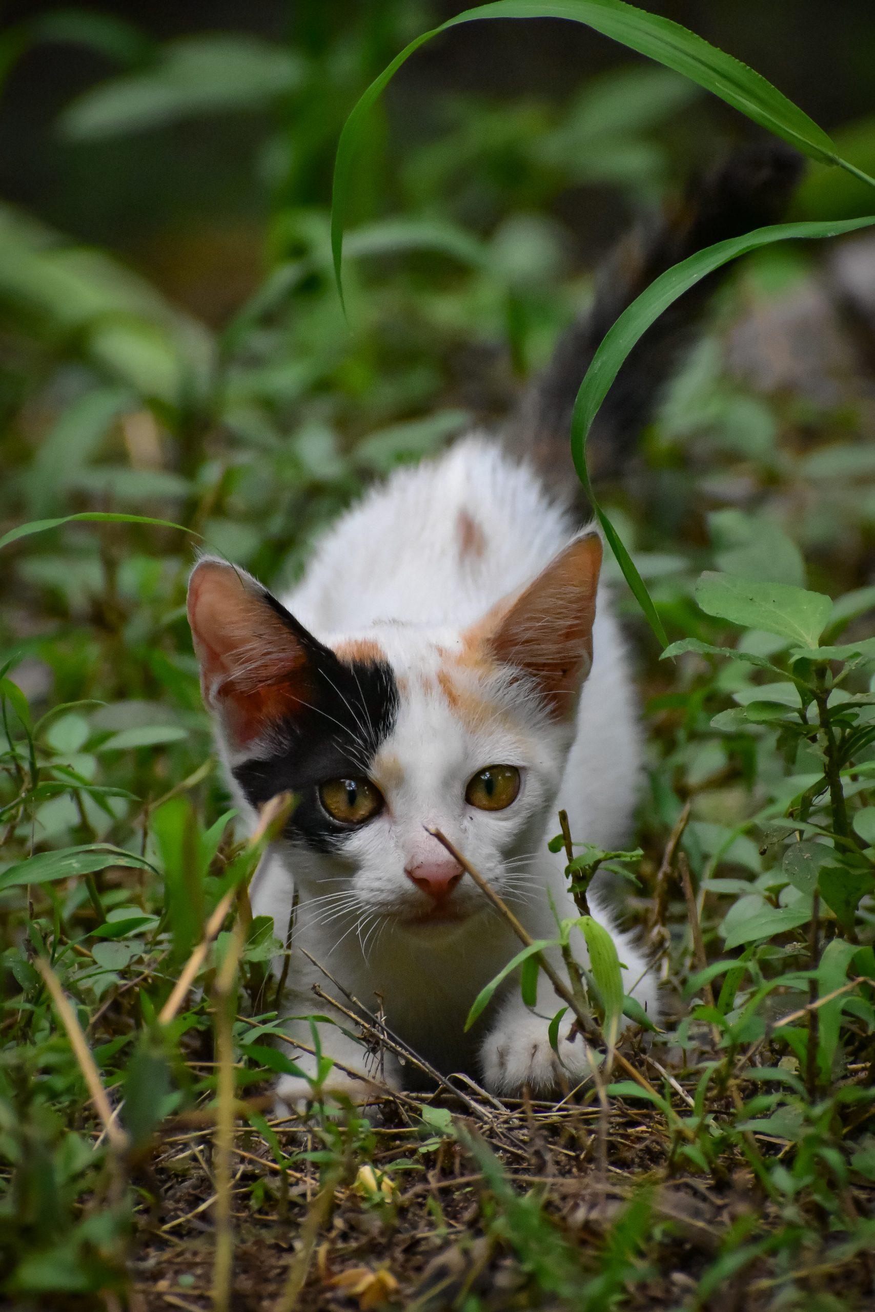 Kitten with Yellow Eyes