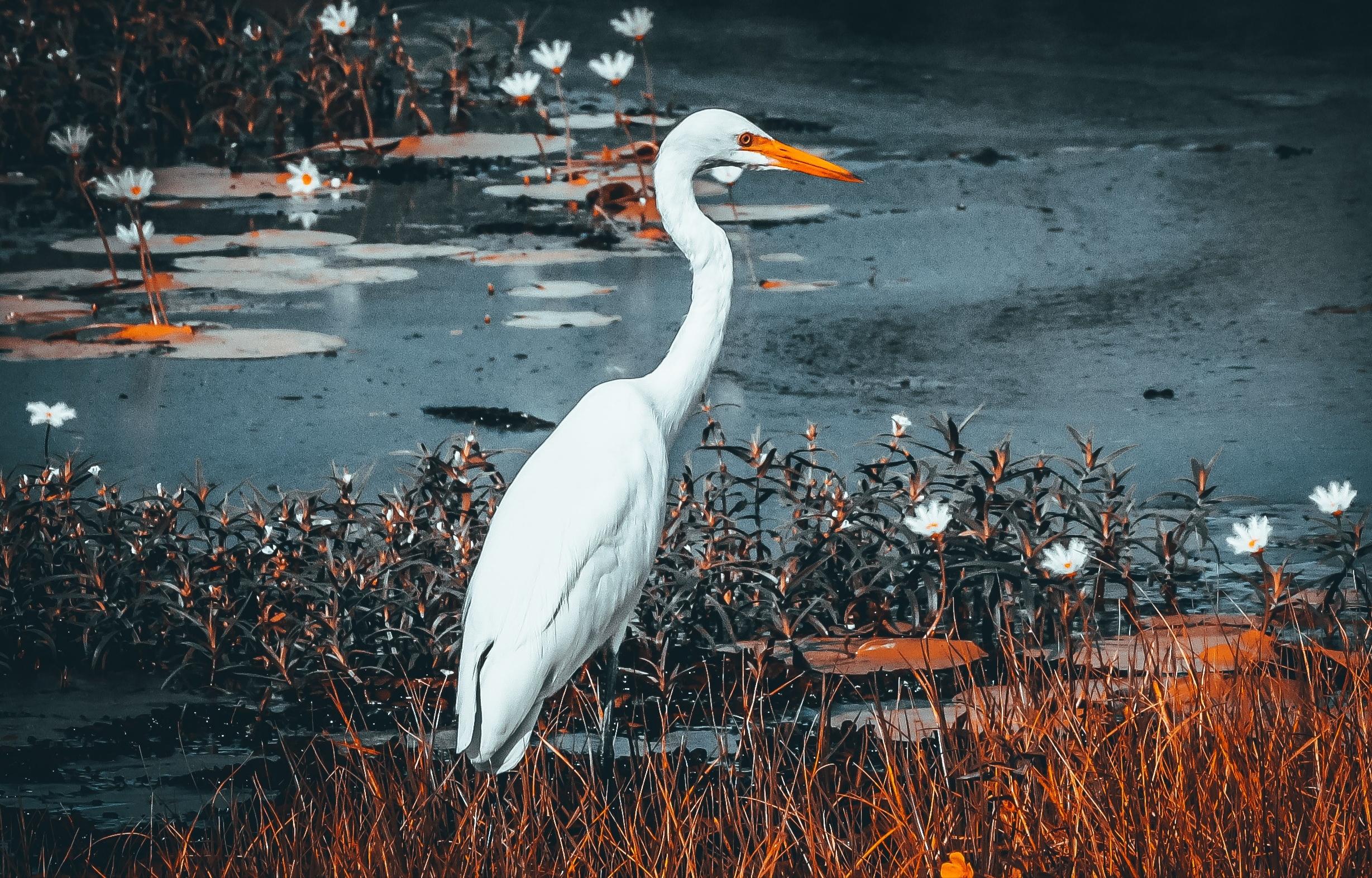 bird near a lake