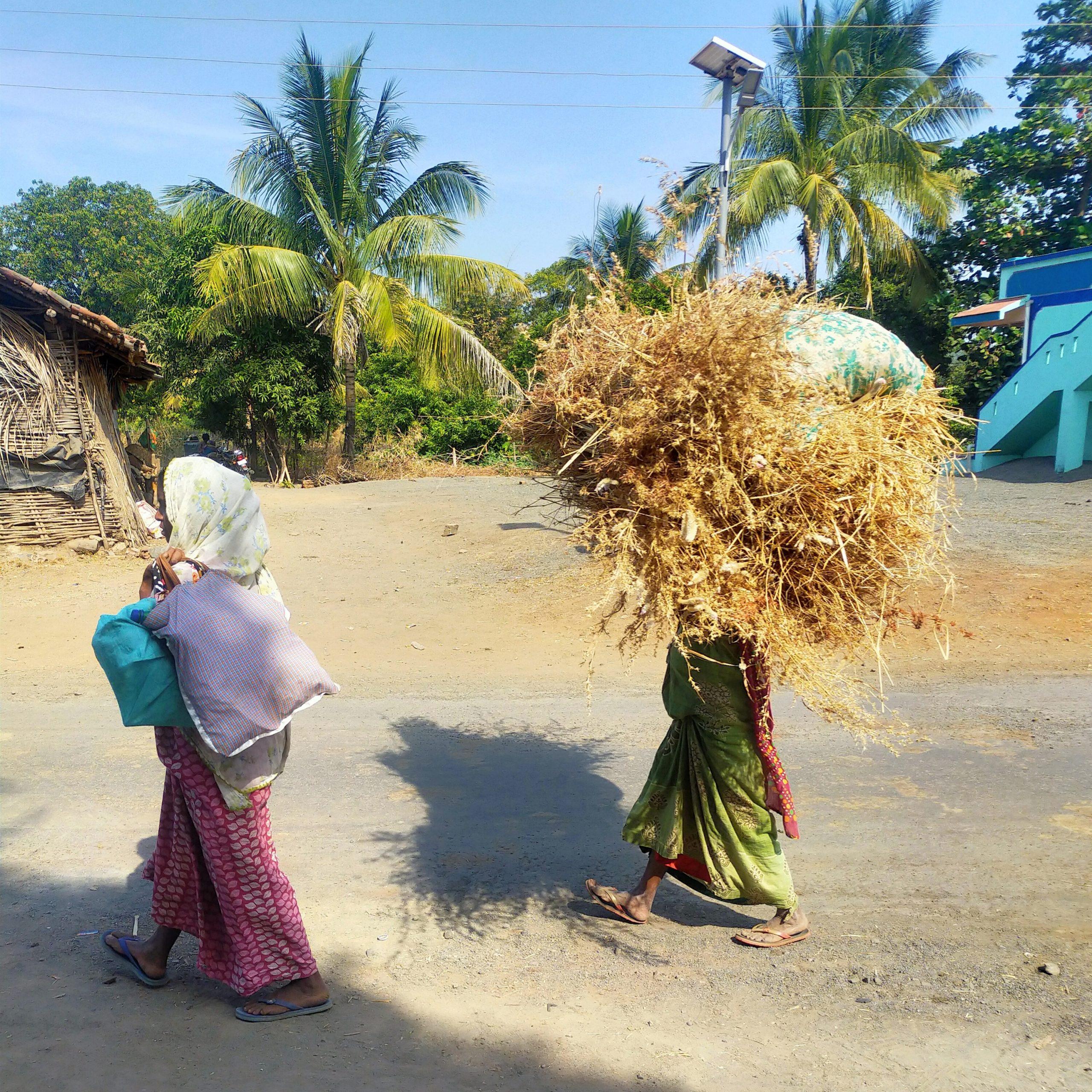 Ladies carrying fodder