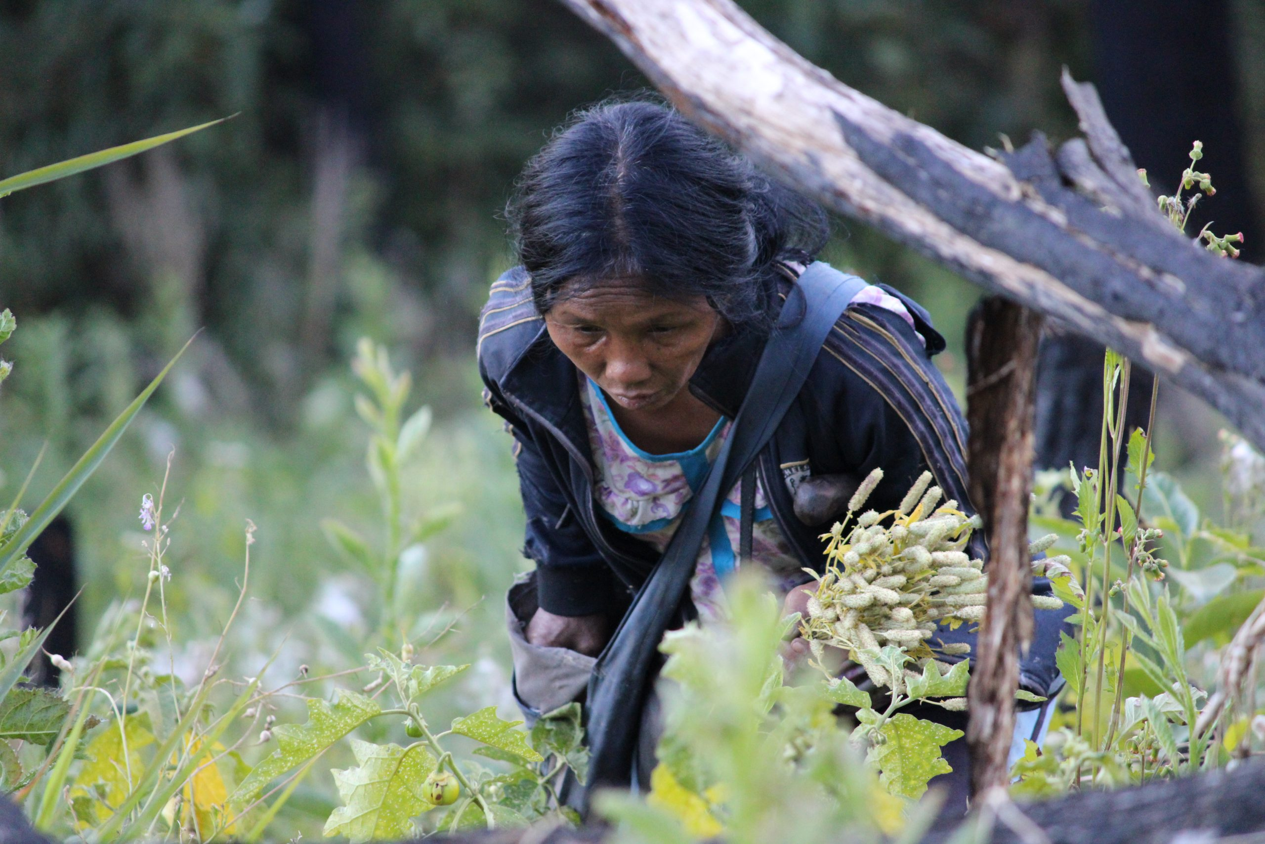Lady picking flowers in farm