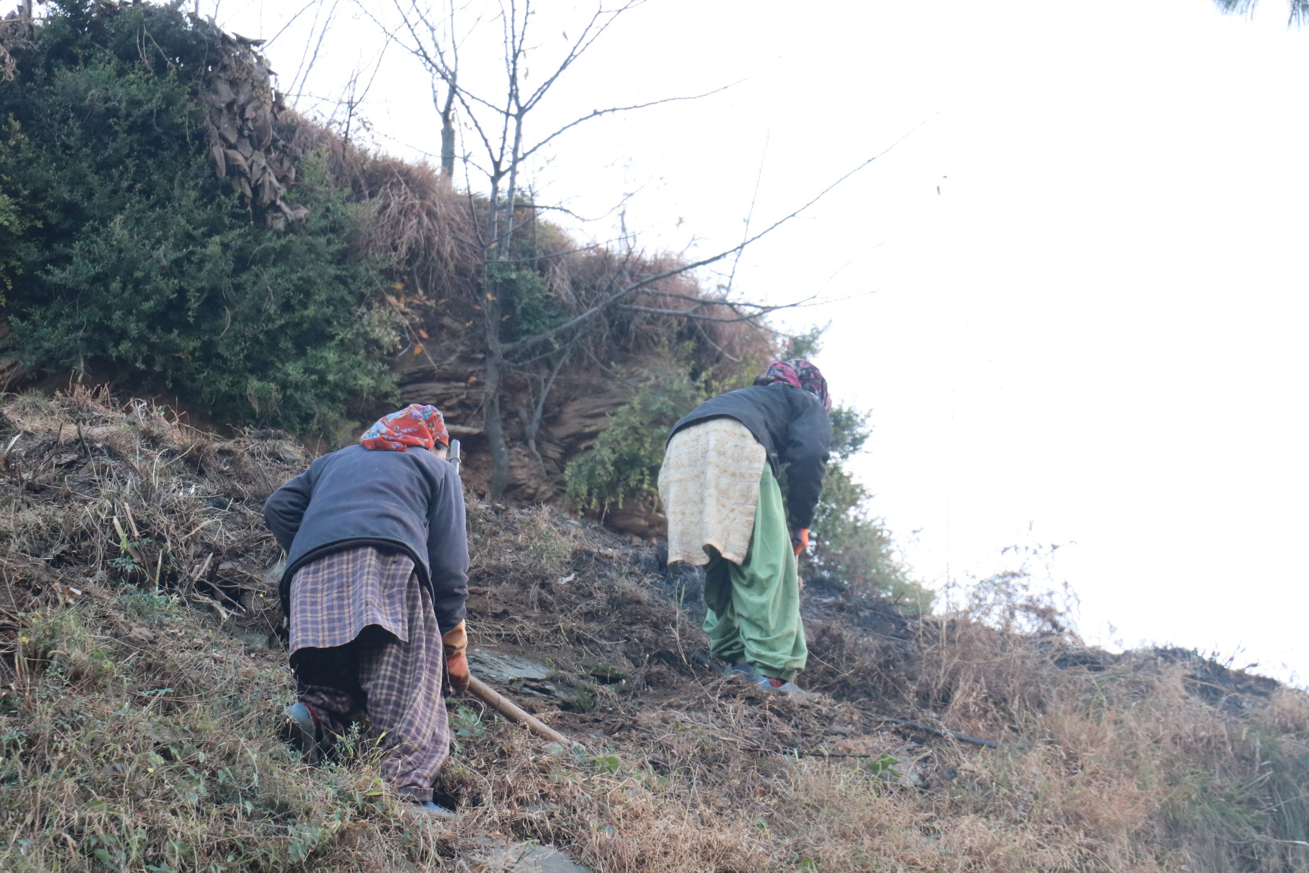 Lady farmers working on a hill