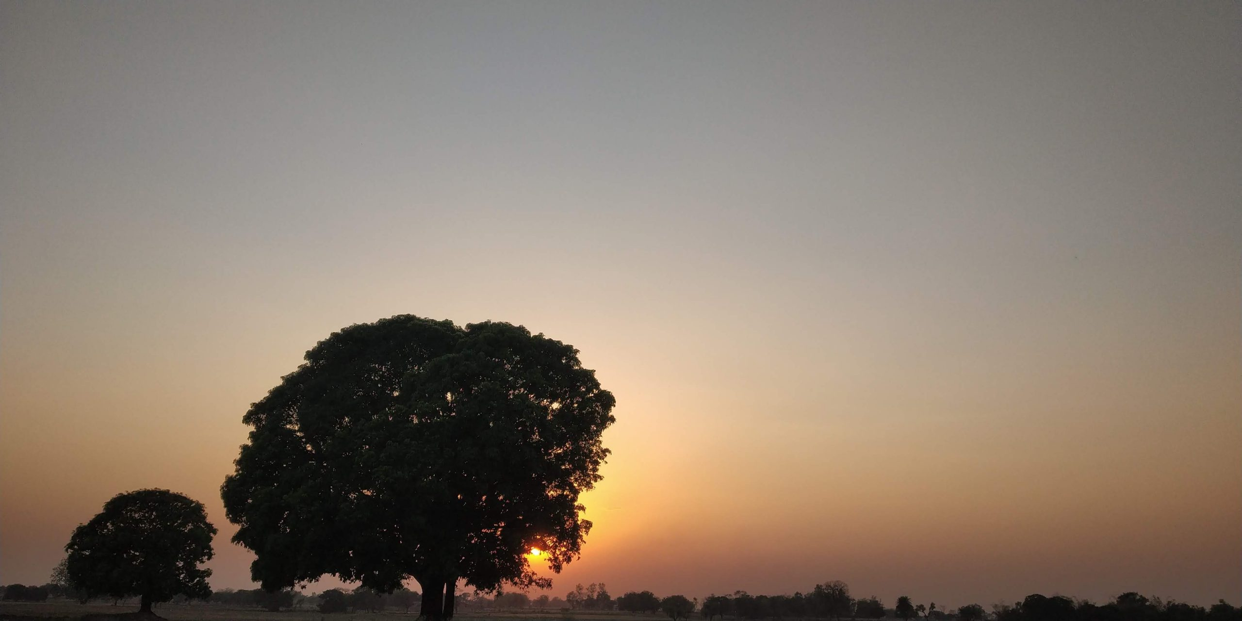 Landscape of skyline, sunset and trees