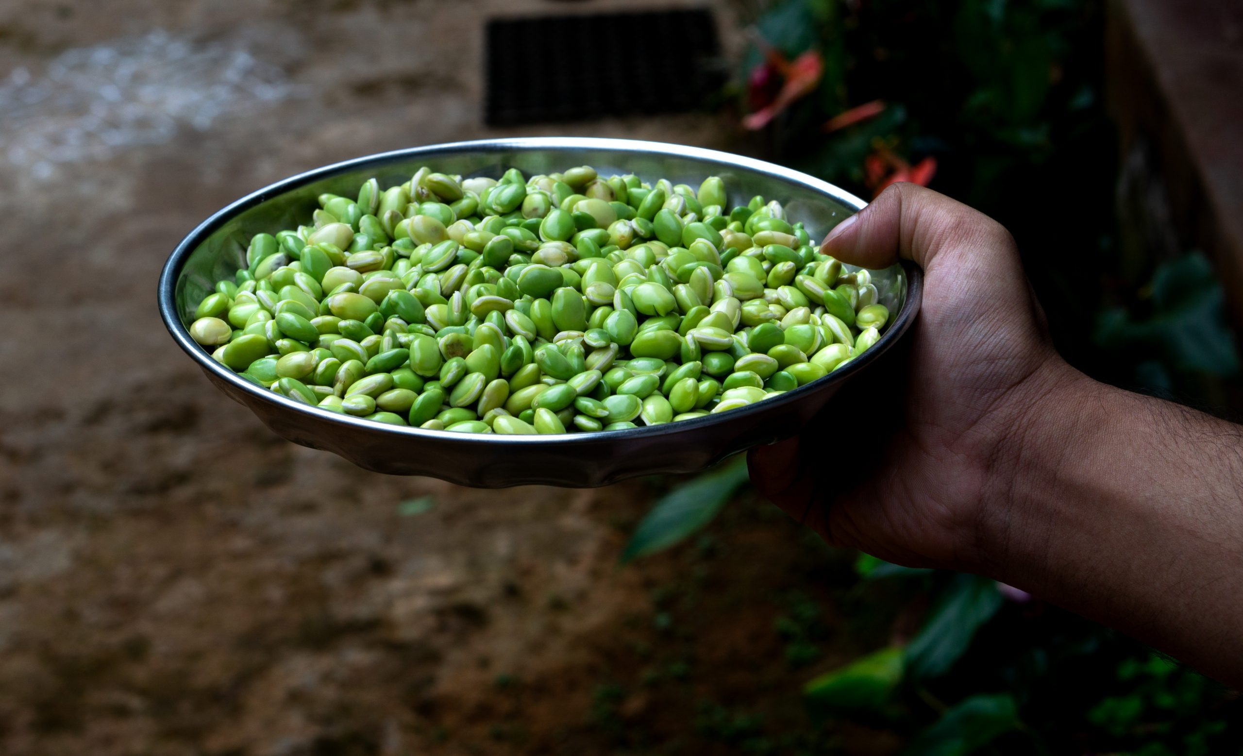 Lima beans in a plate