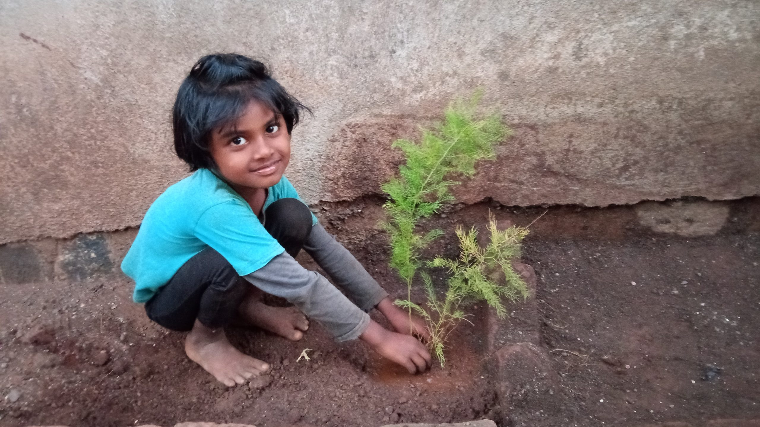 A little girl planting a plant