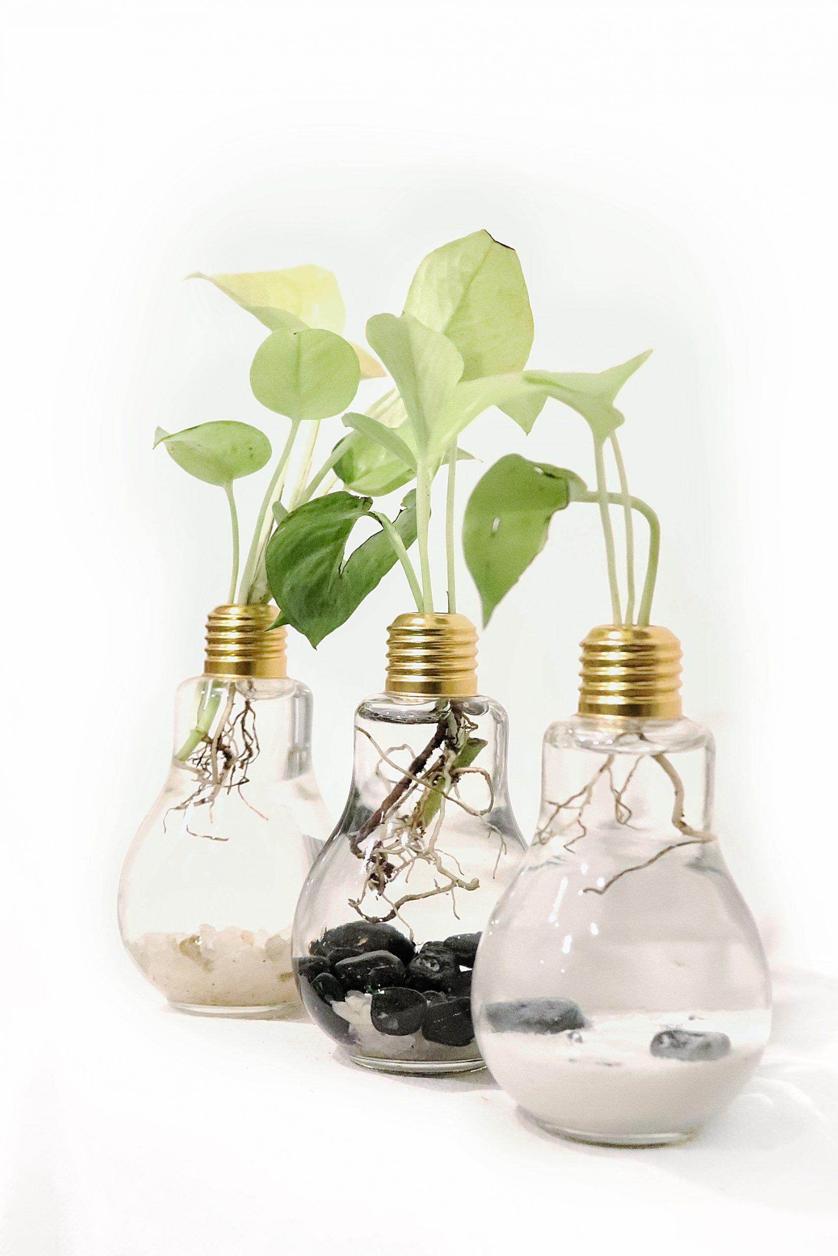 plant in light bulbs