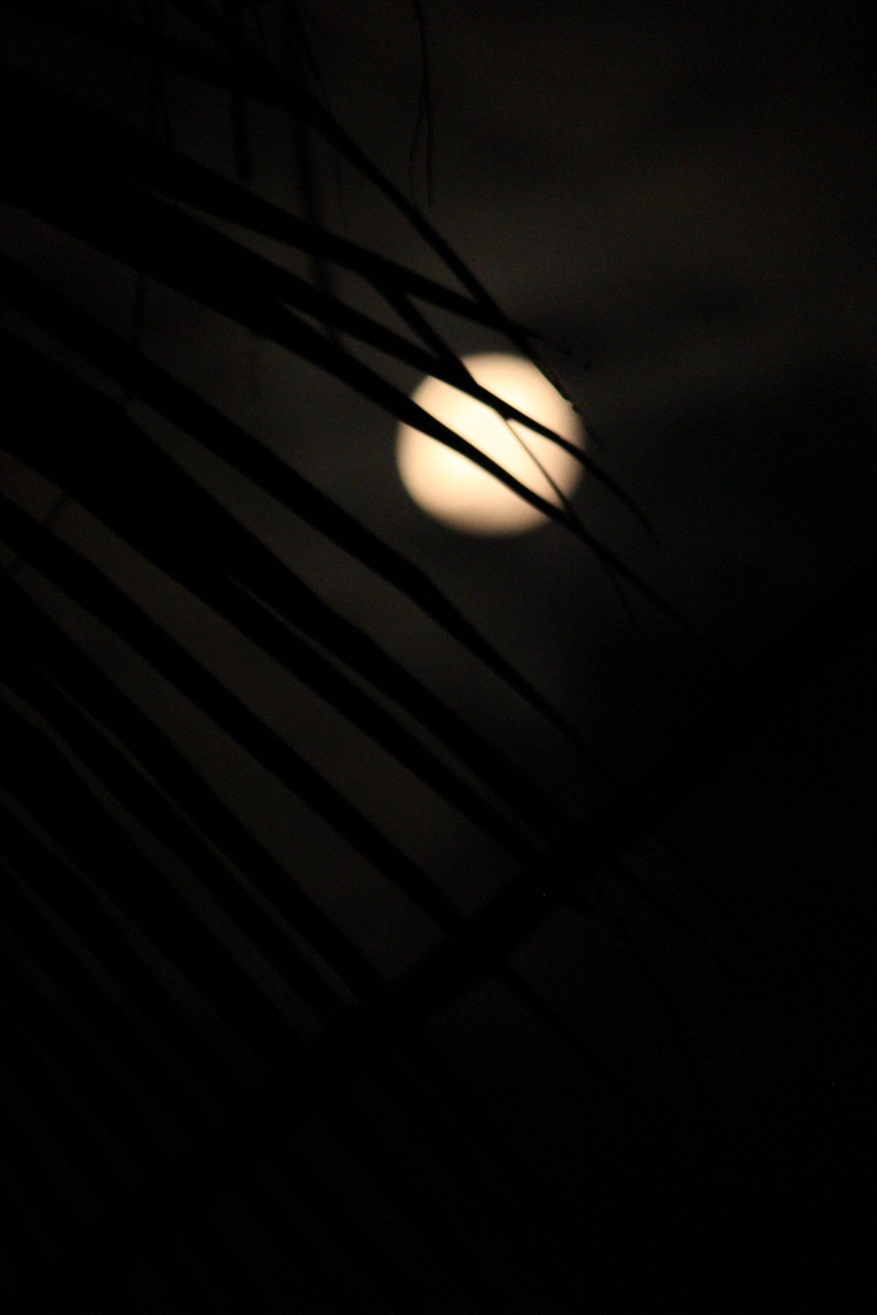 Night moon behind leaves