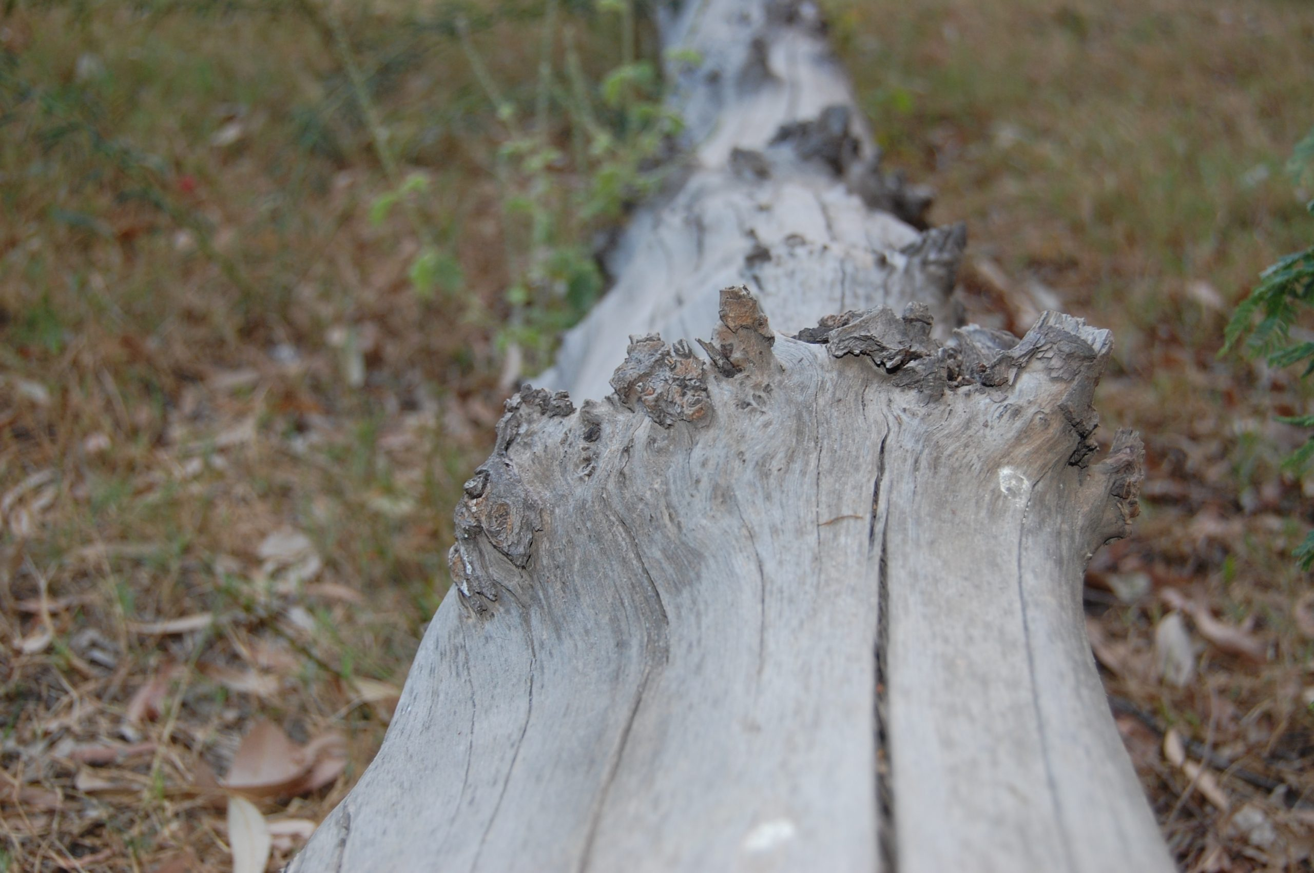 A fallen tree trunk