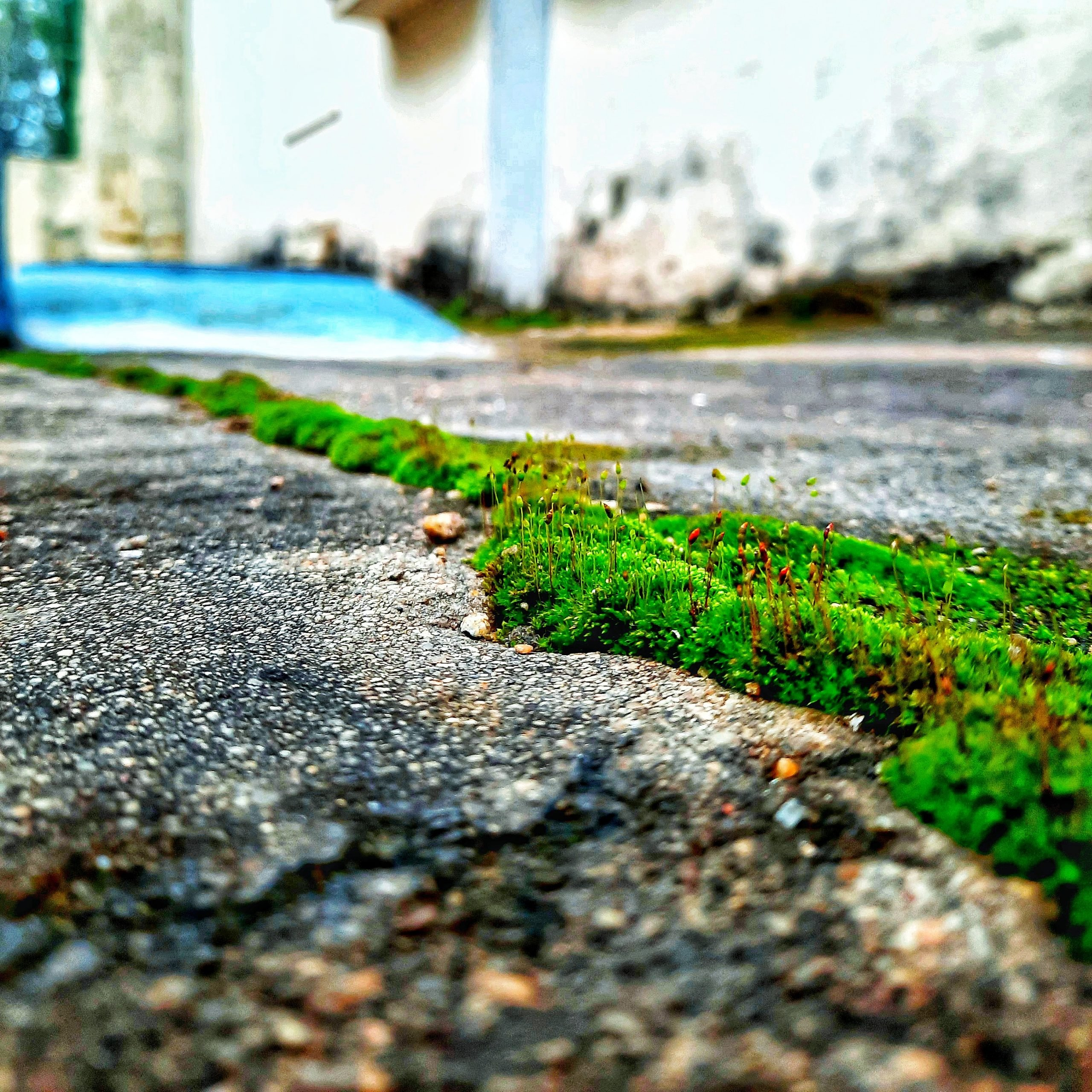 Moss on a solid surface