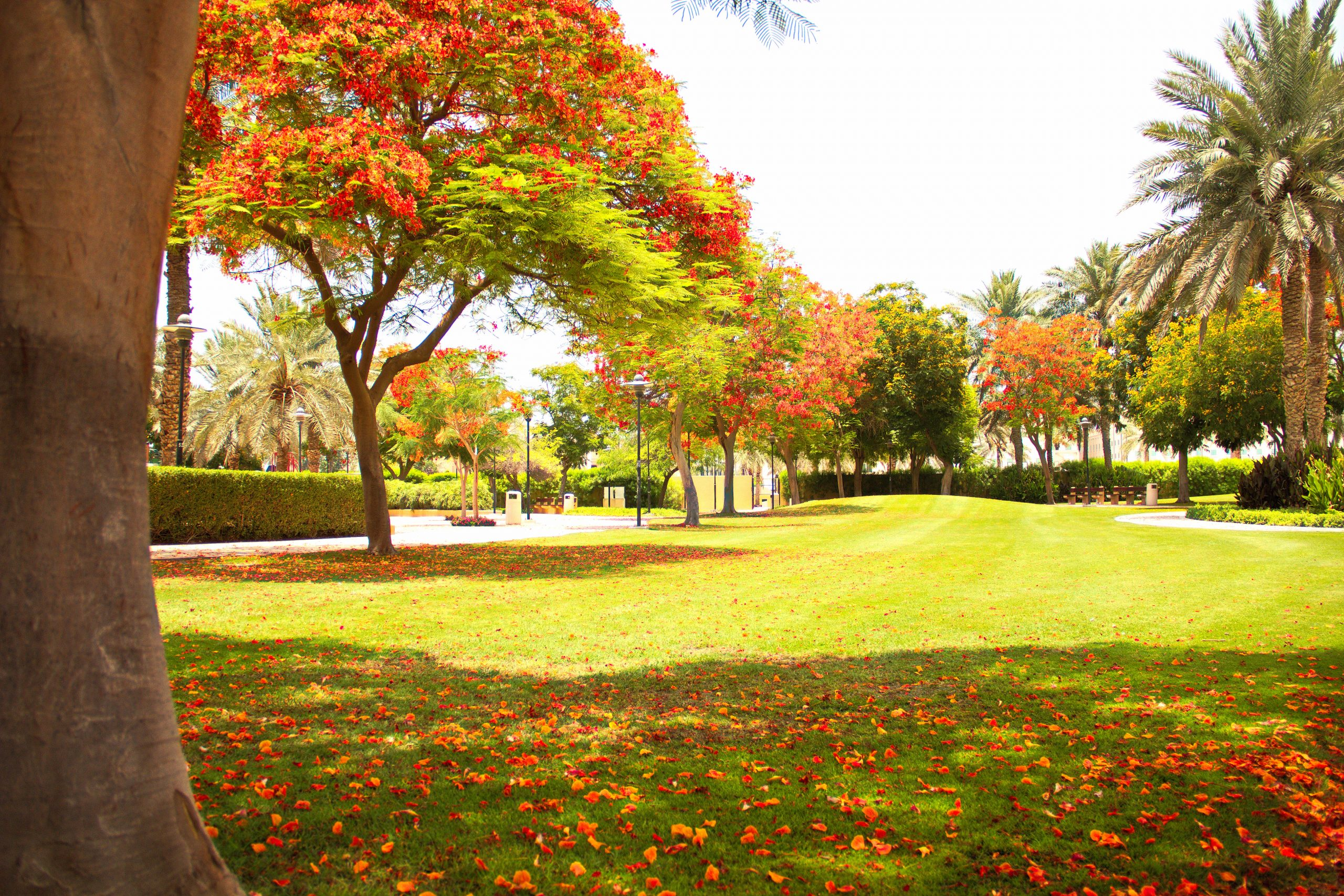 Greenery of a park