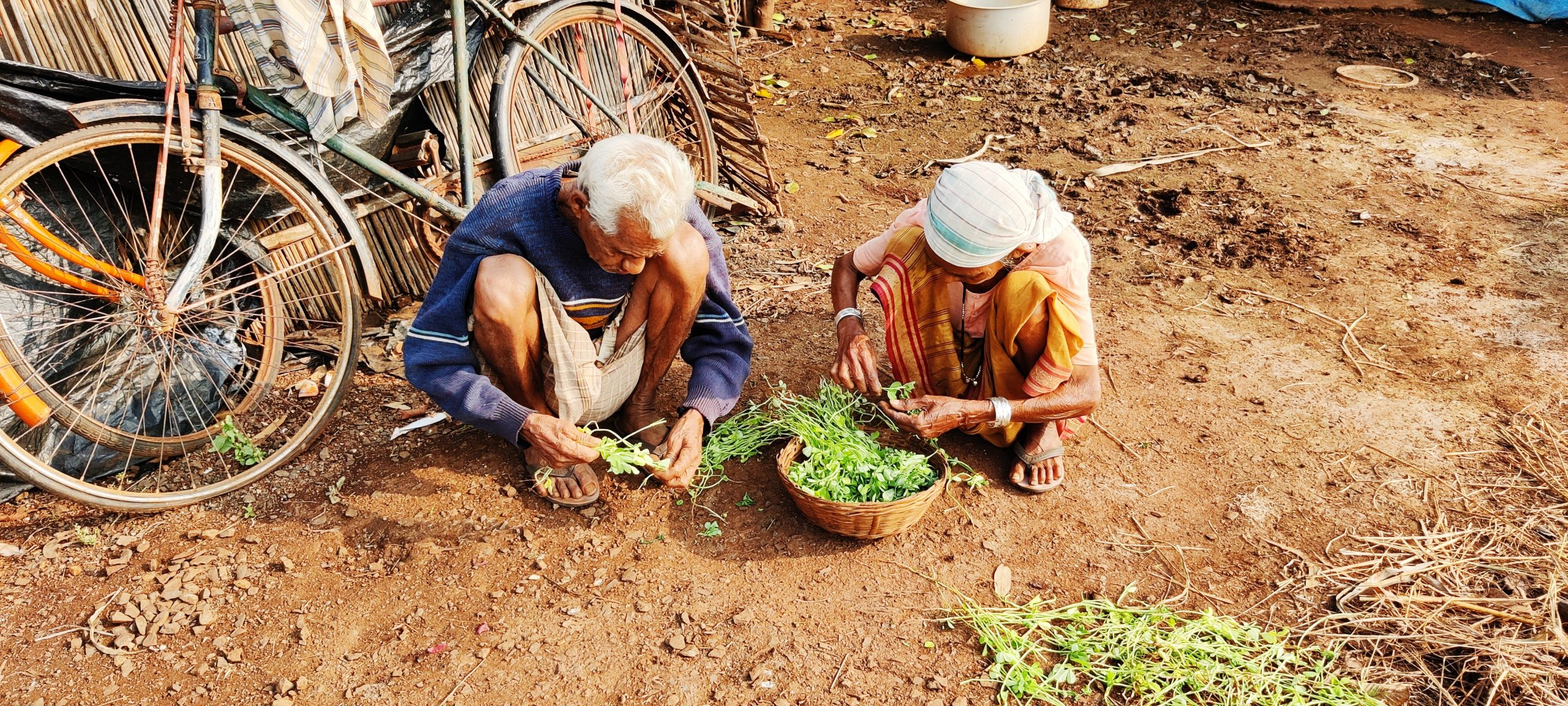 Old Couple separating fresh leaves