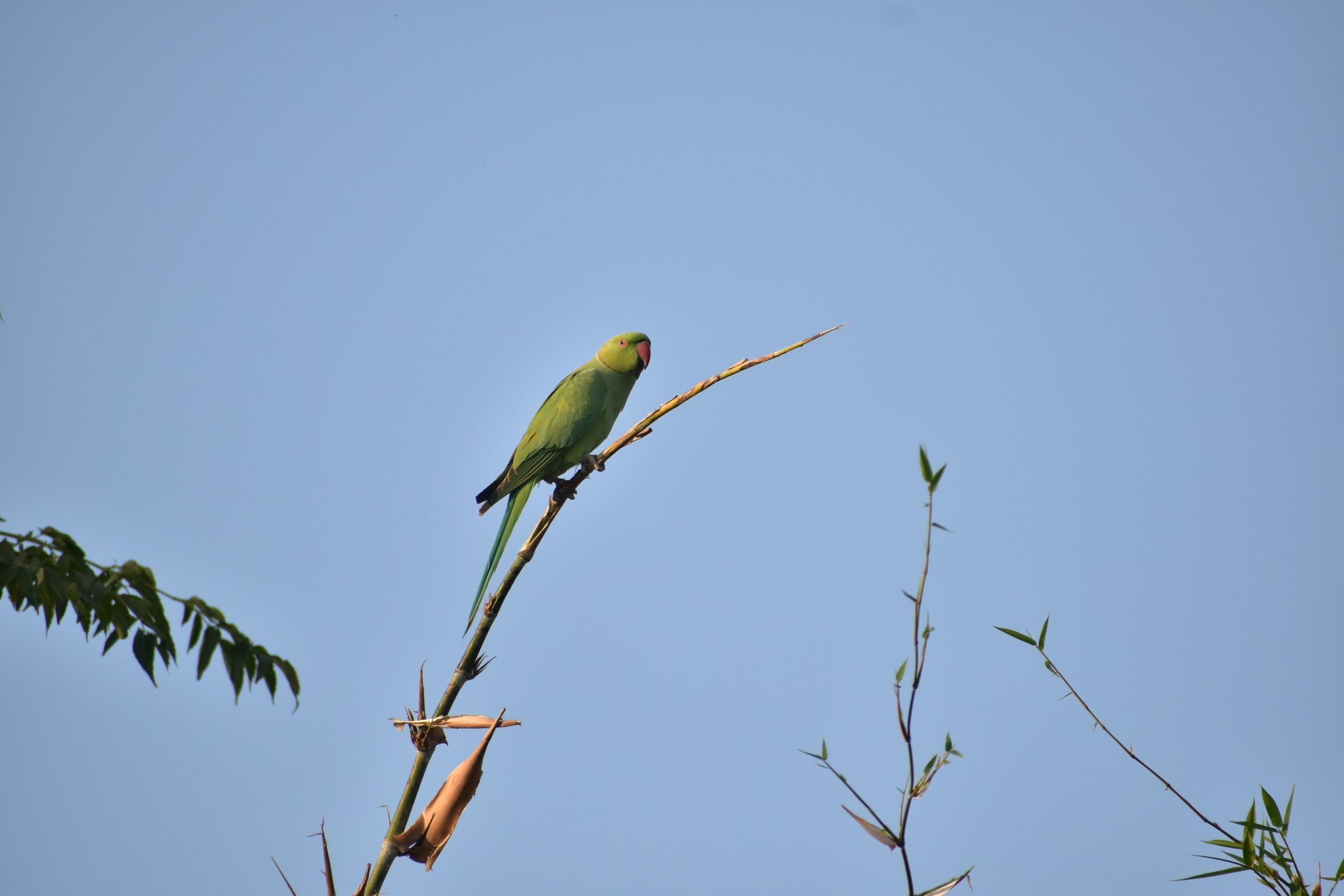 parrot on a stem