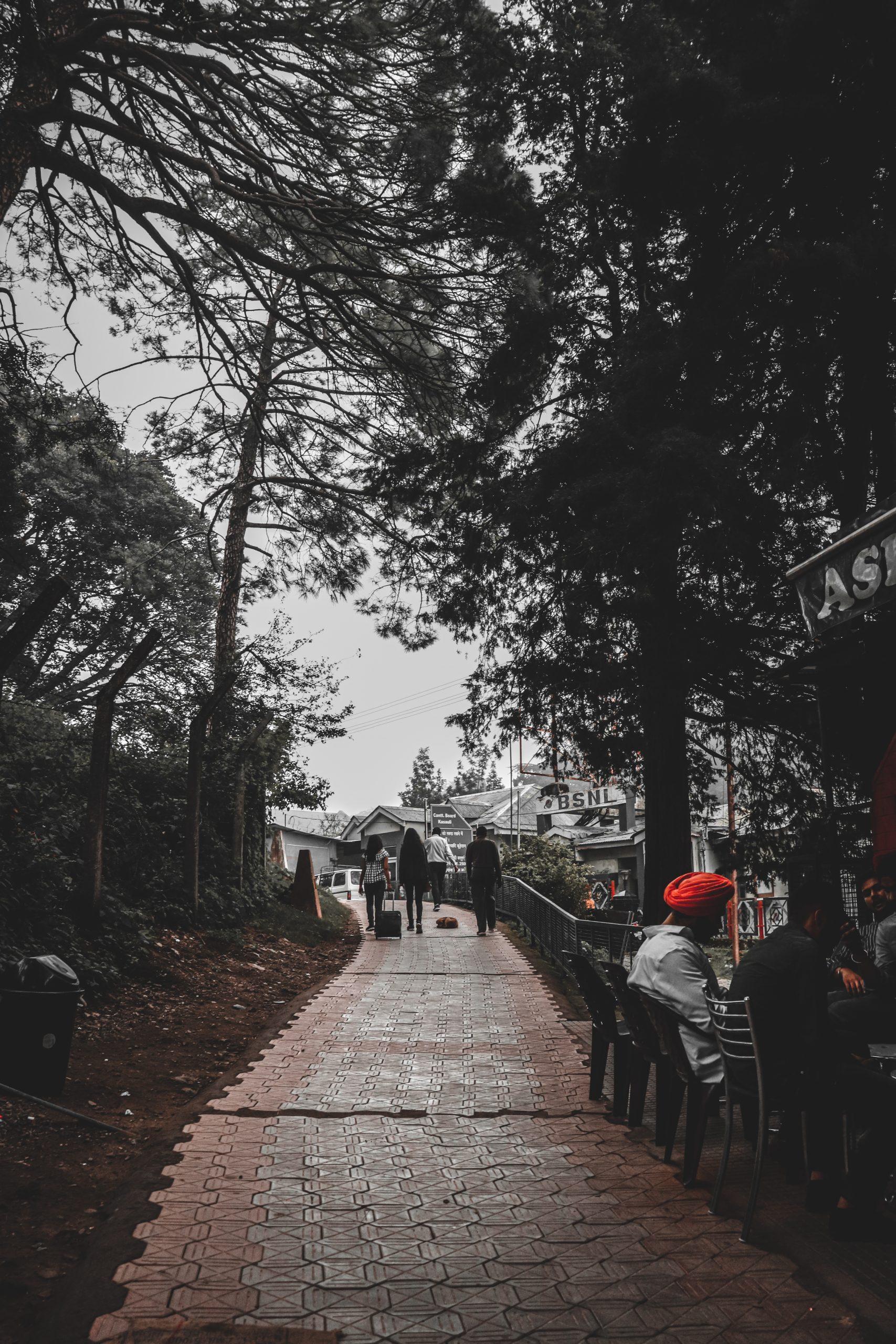path among trees
