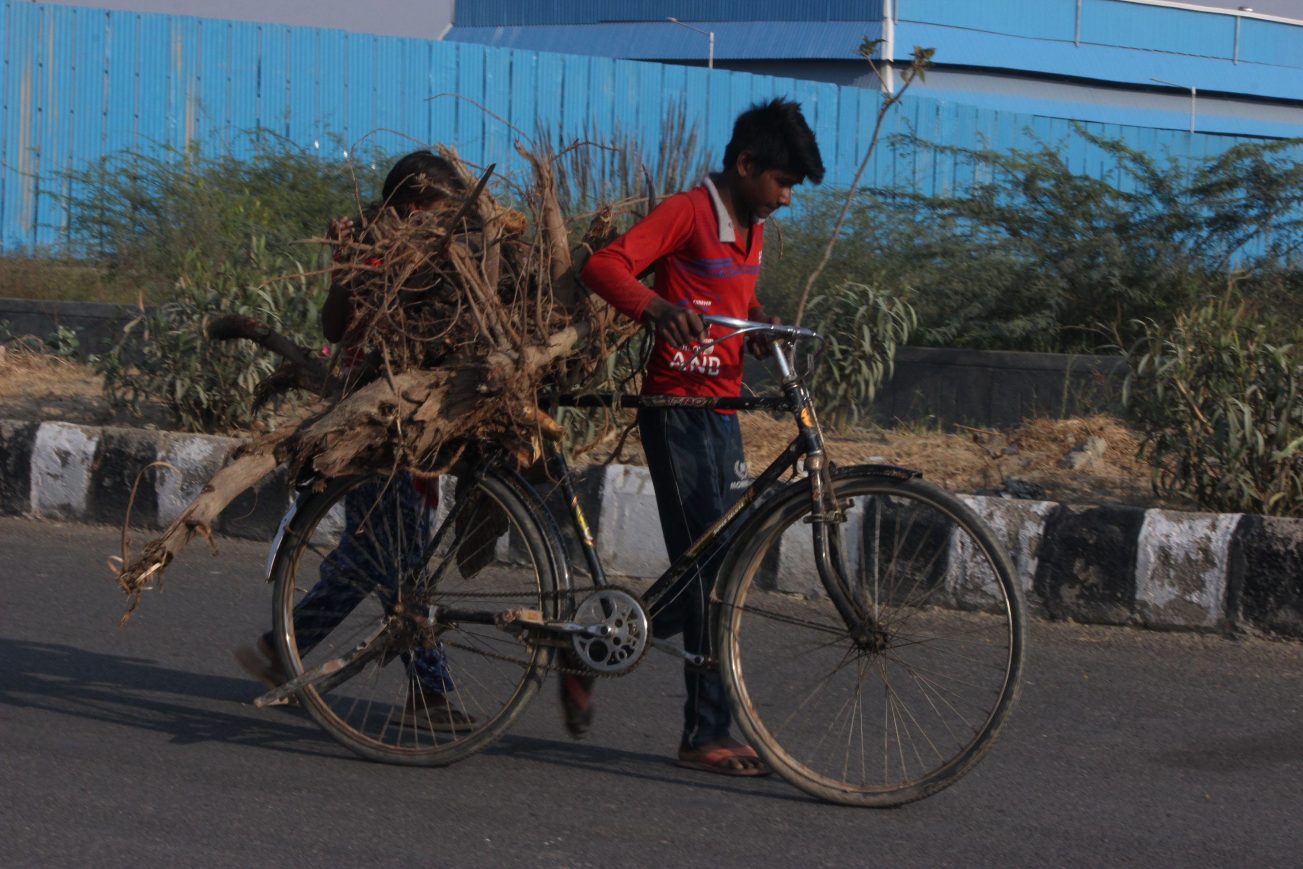 People carrying woods on bicycle