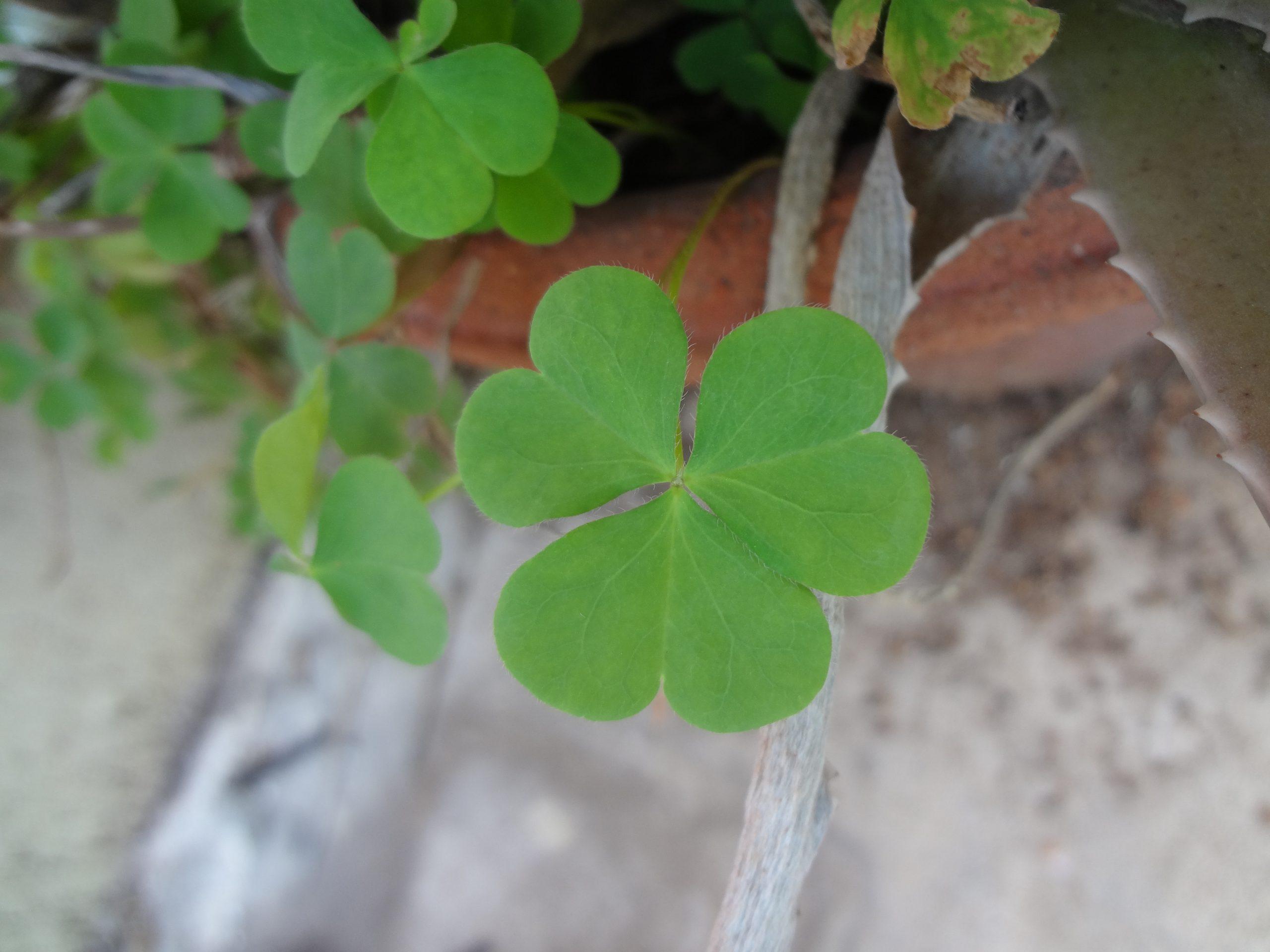 Petals of green plant