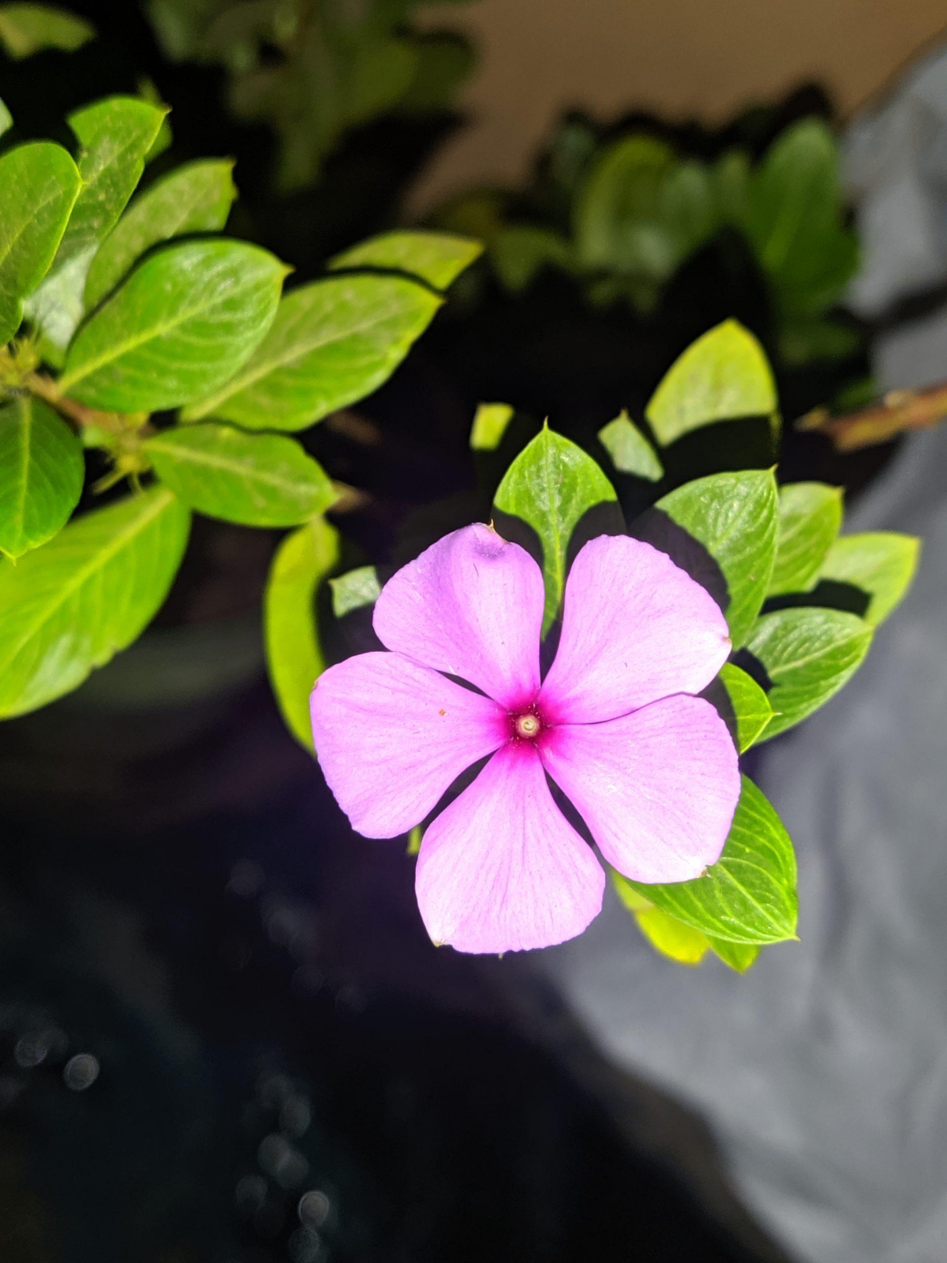 Pink Flower Close-up