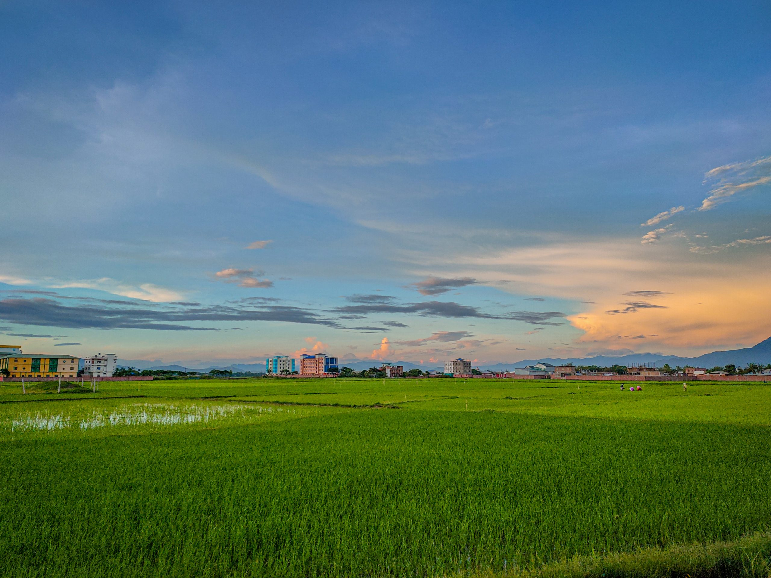 Landscape of farm