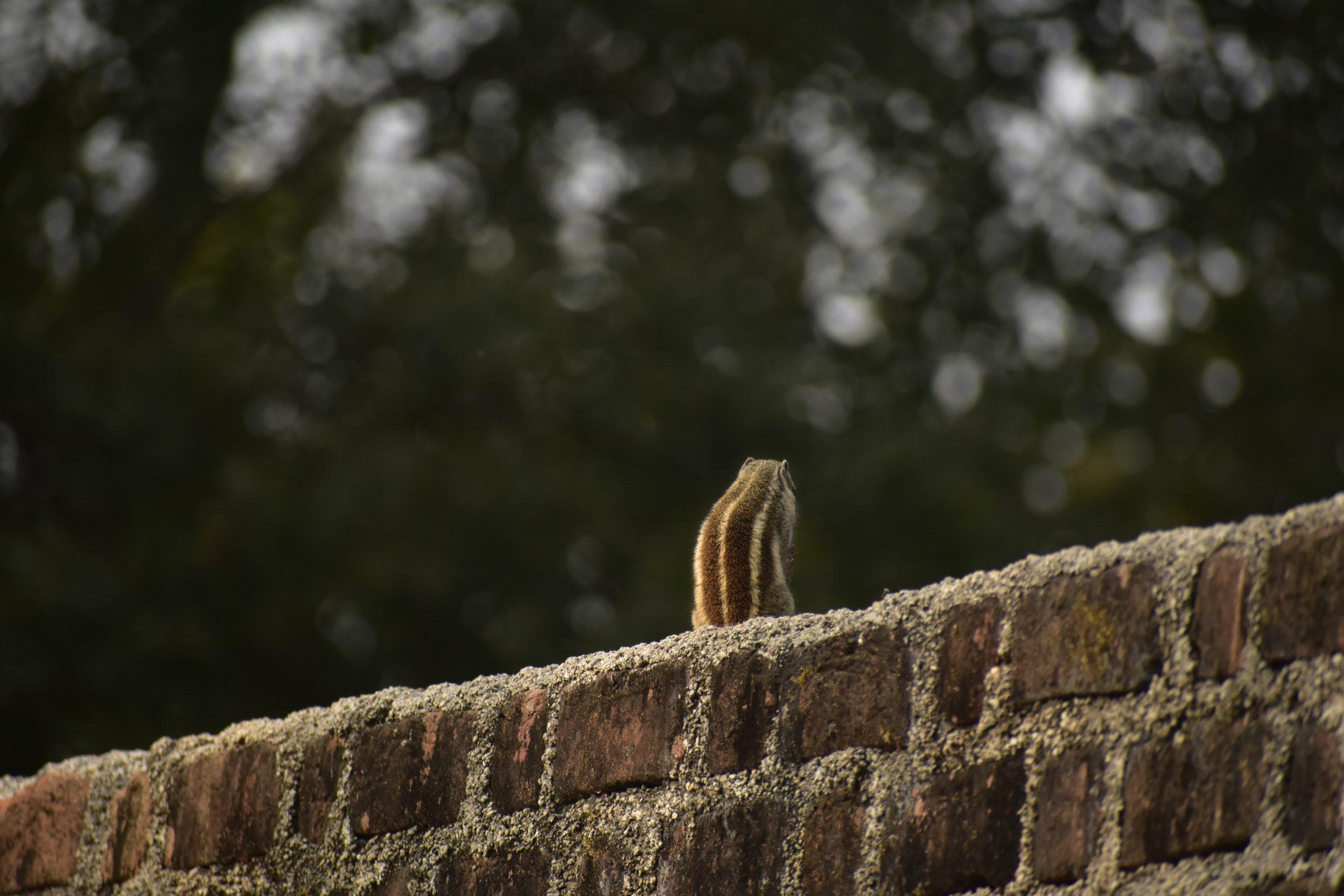 Squirrel sitting on wall