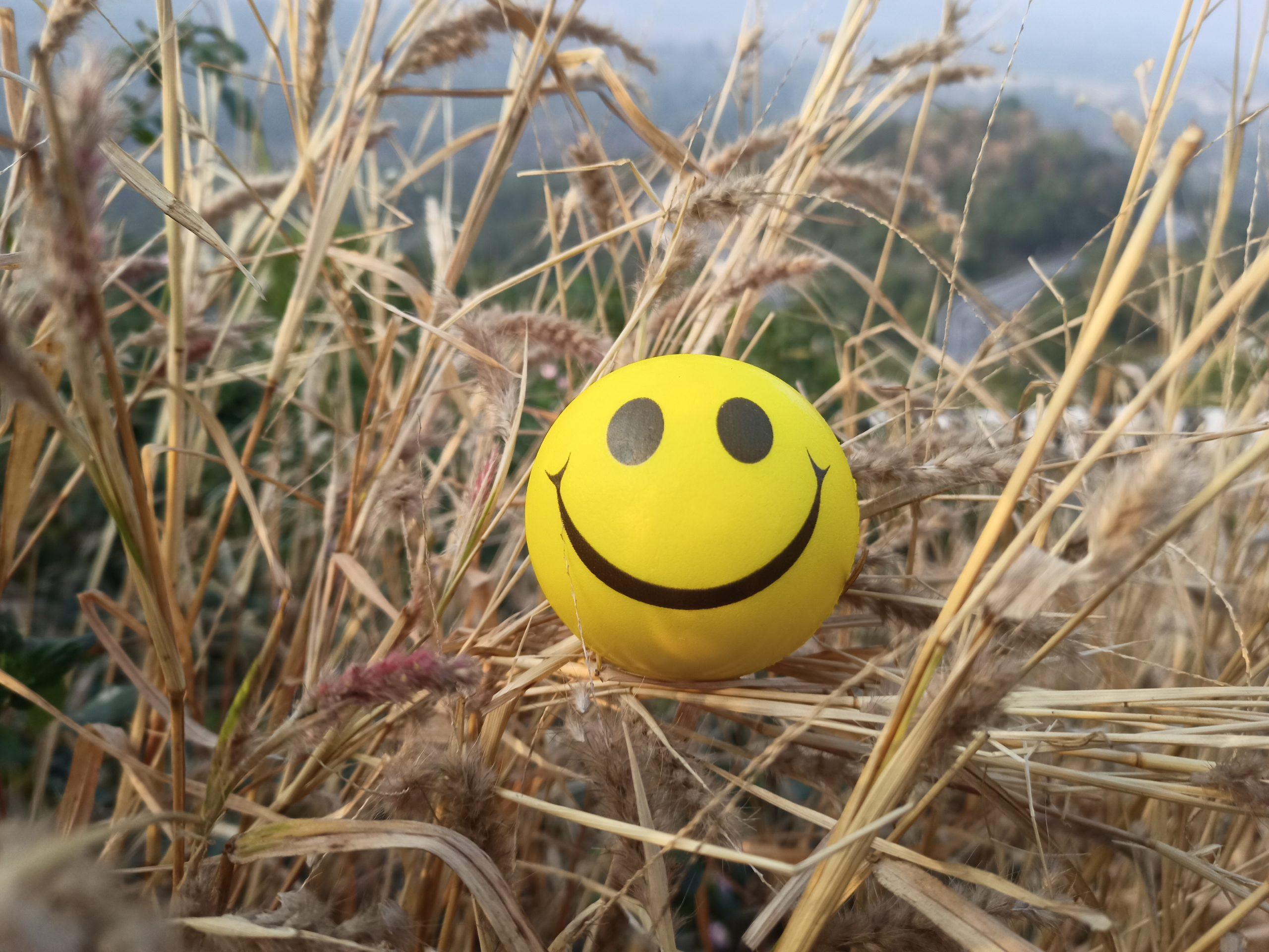 Smiley sponge ball lying in a hay