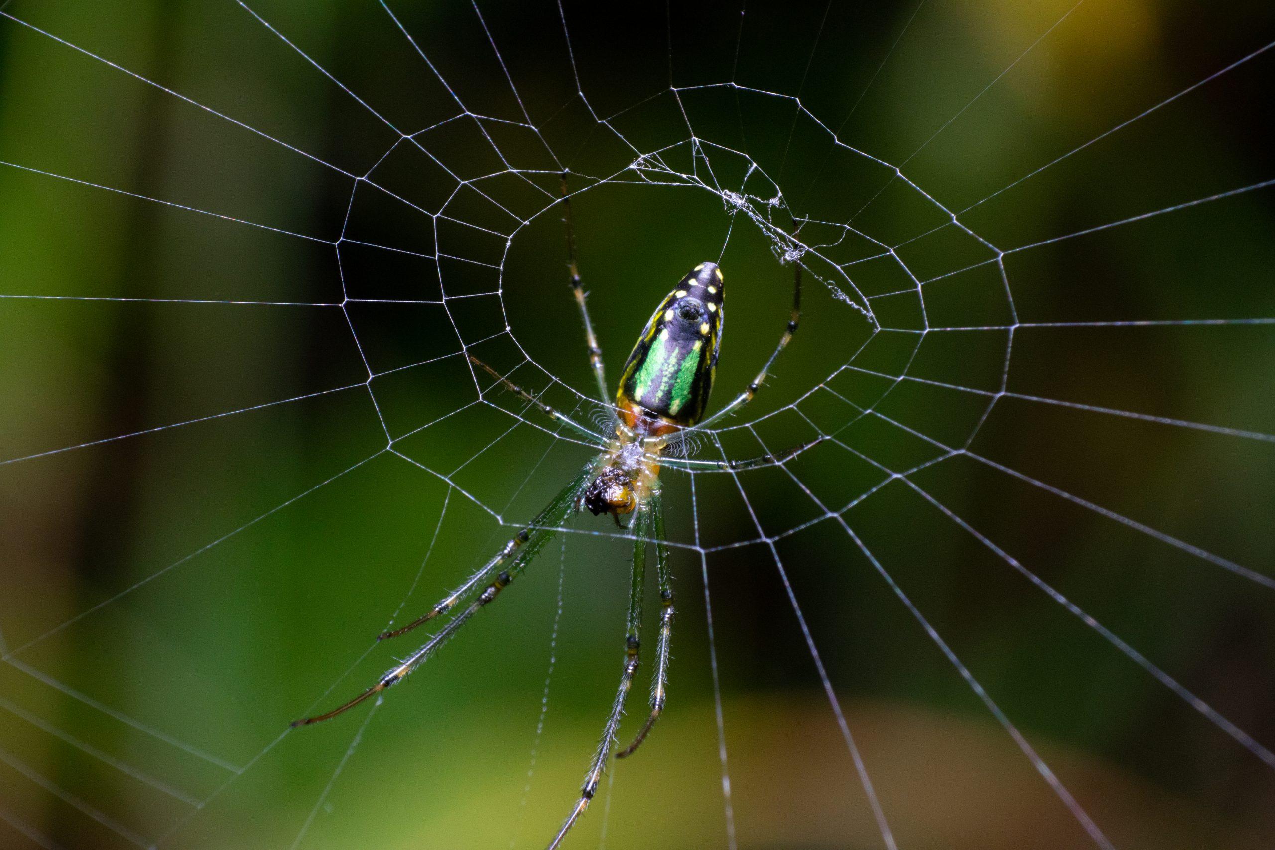 Spider's Cobweb