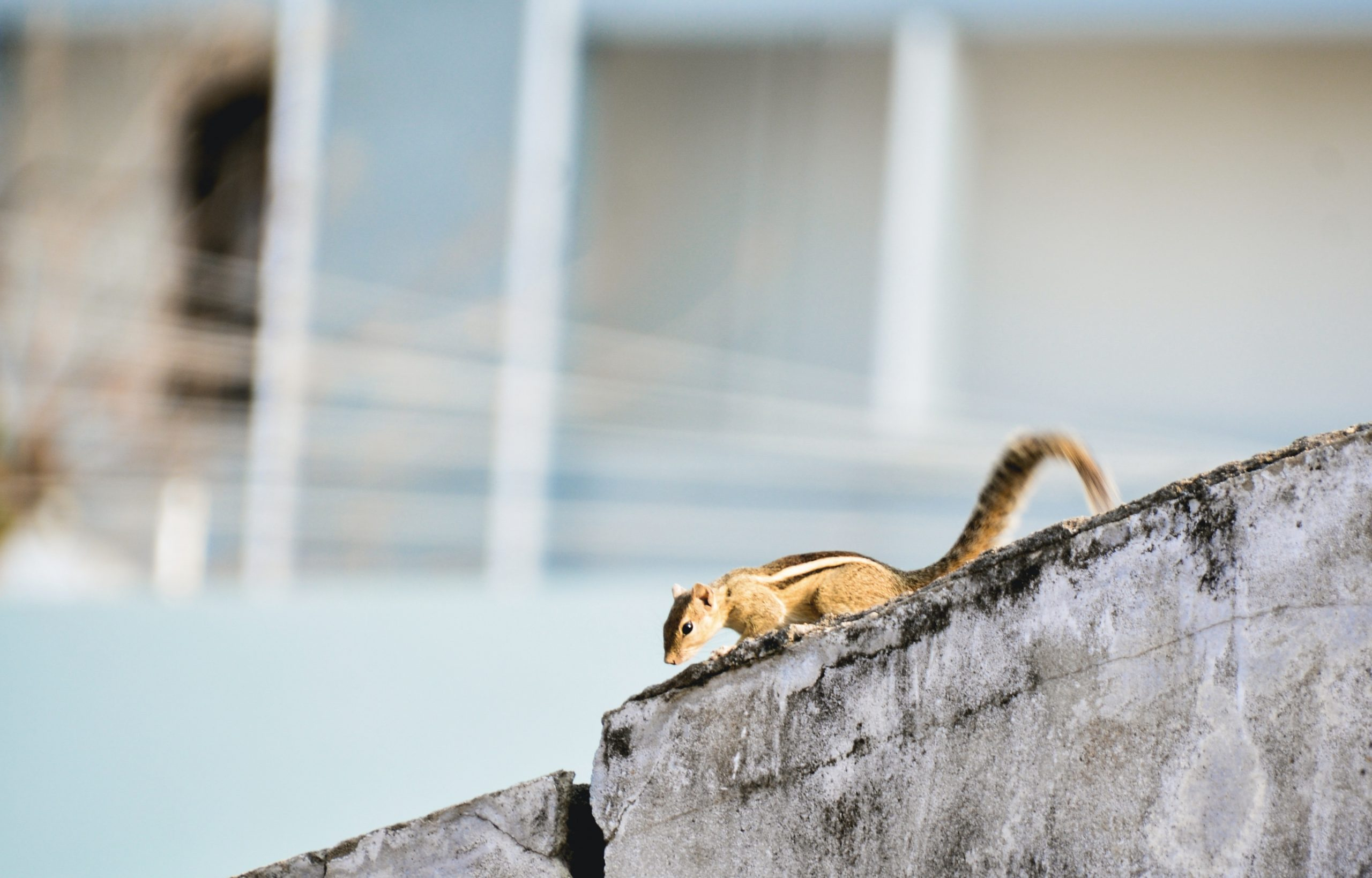 Squirrel on wall