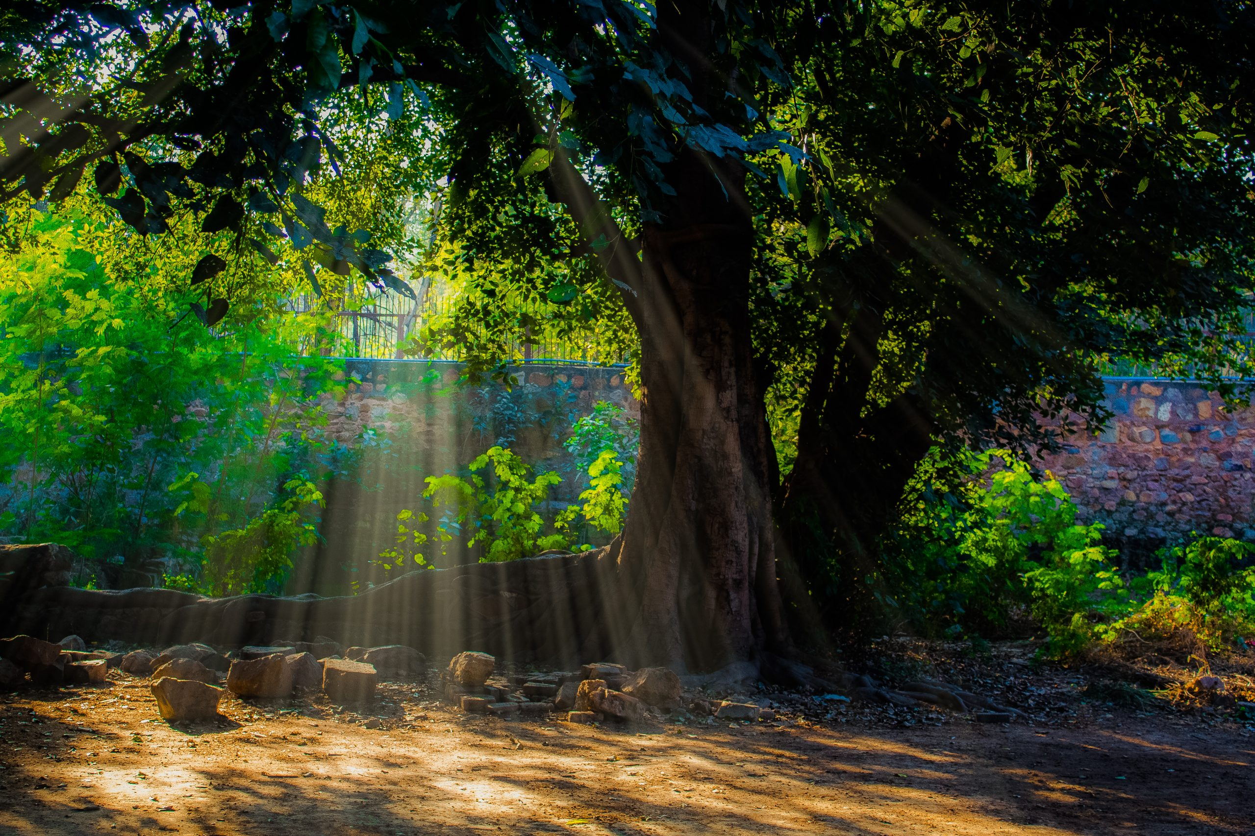 Sun light passing through a tree