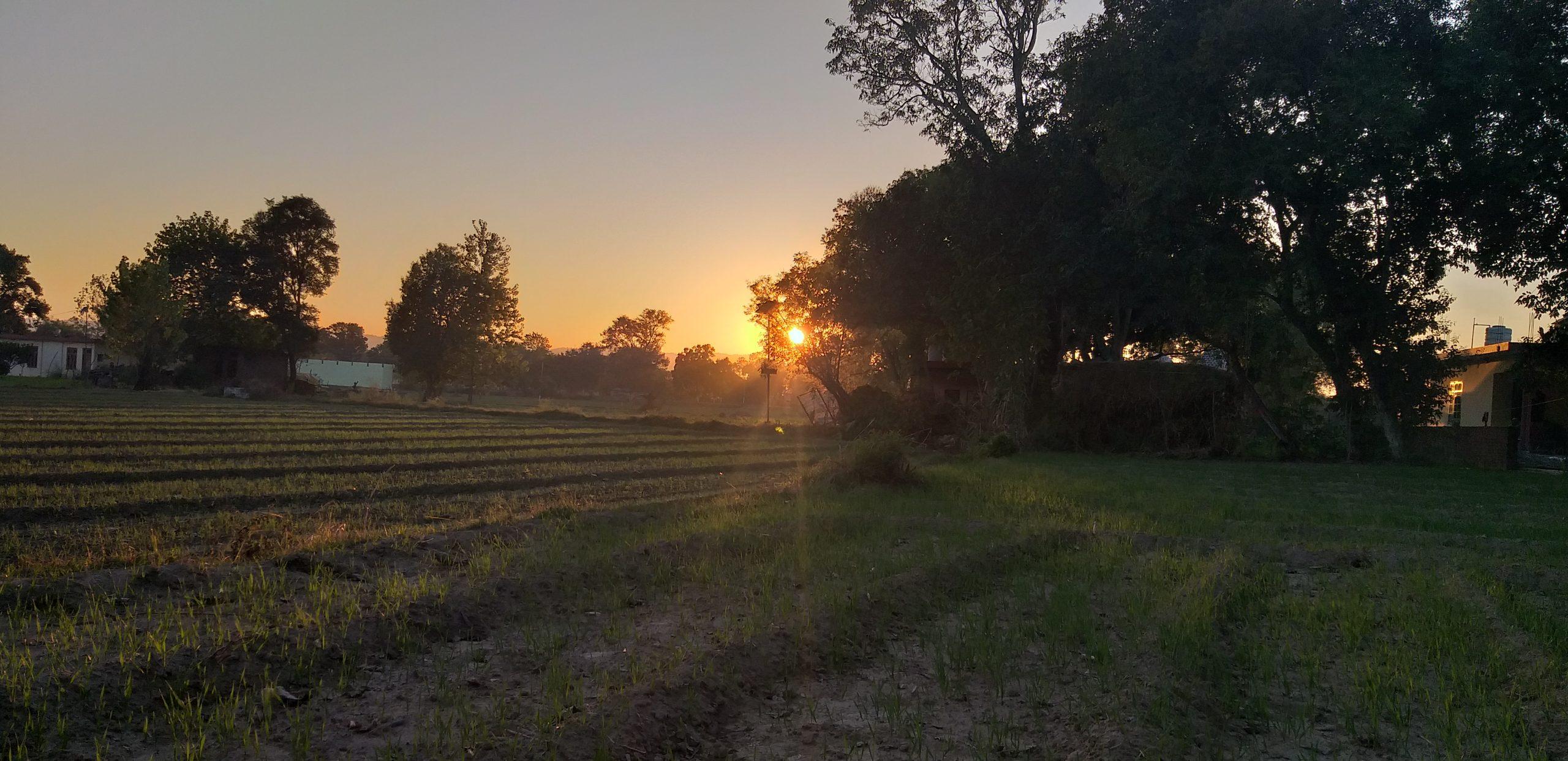 Sunrise through fields